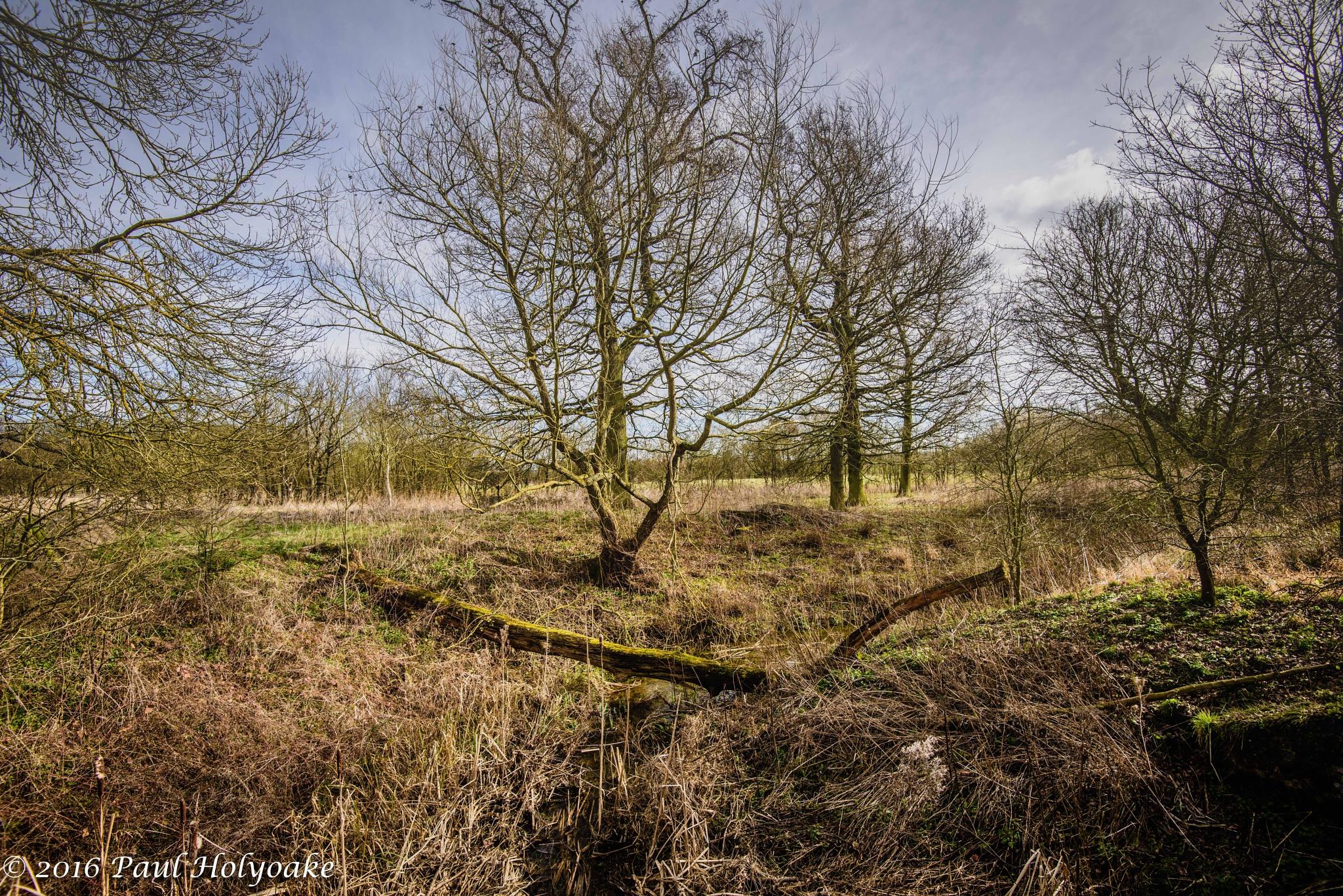 Fallen Tree by Photon