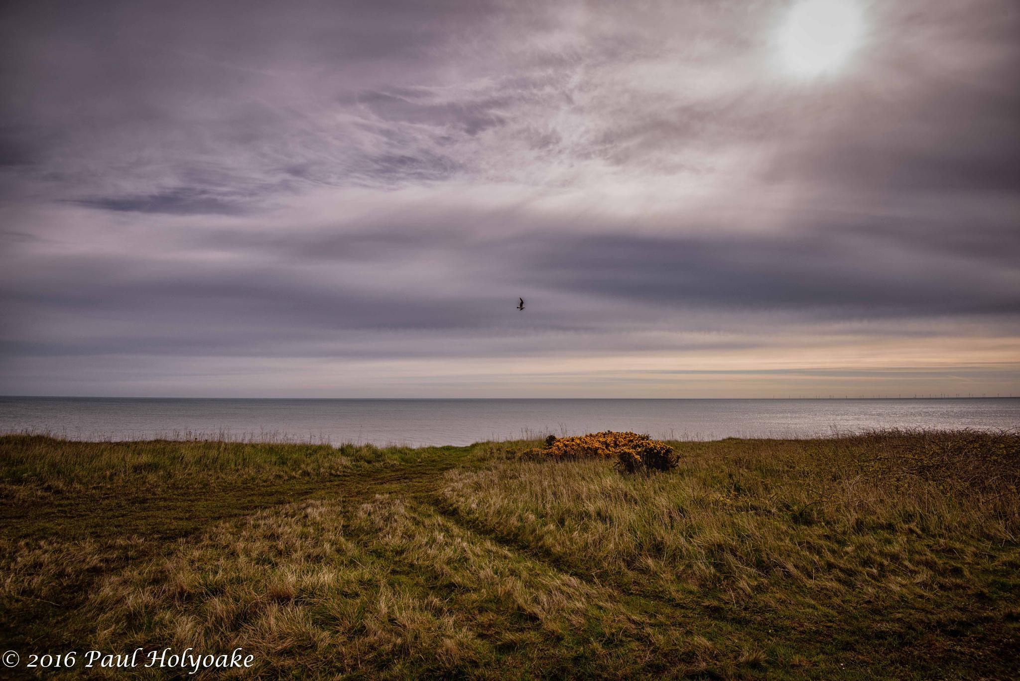Clifftop Gull by Photon