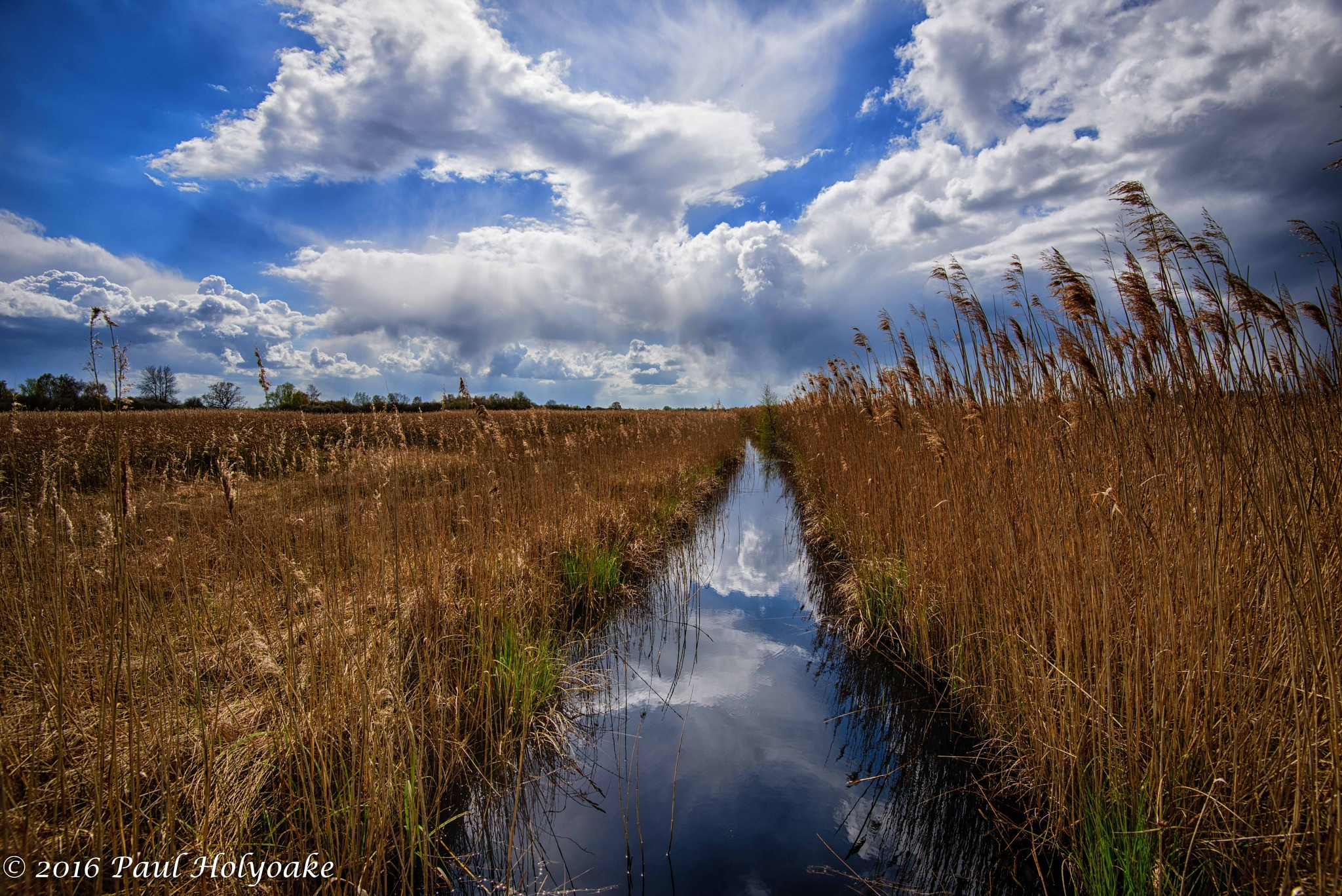 Down at the fen by Photon