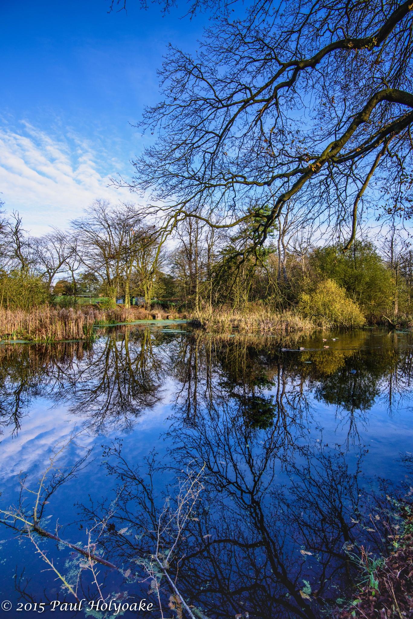 Blue Mirror by Photon