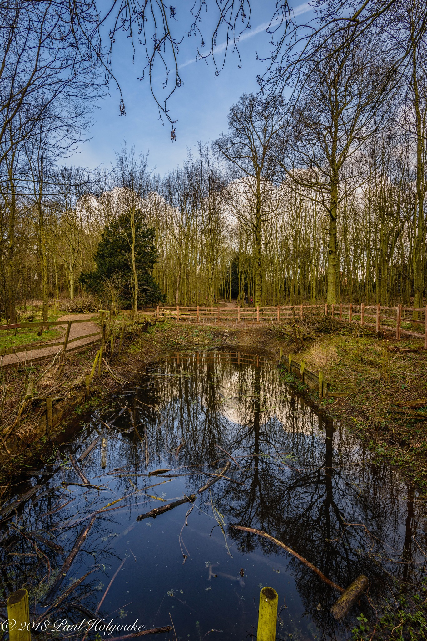 Pond by Photon