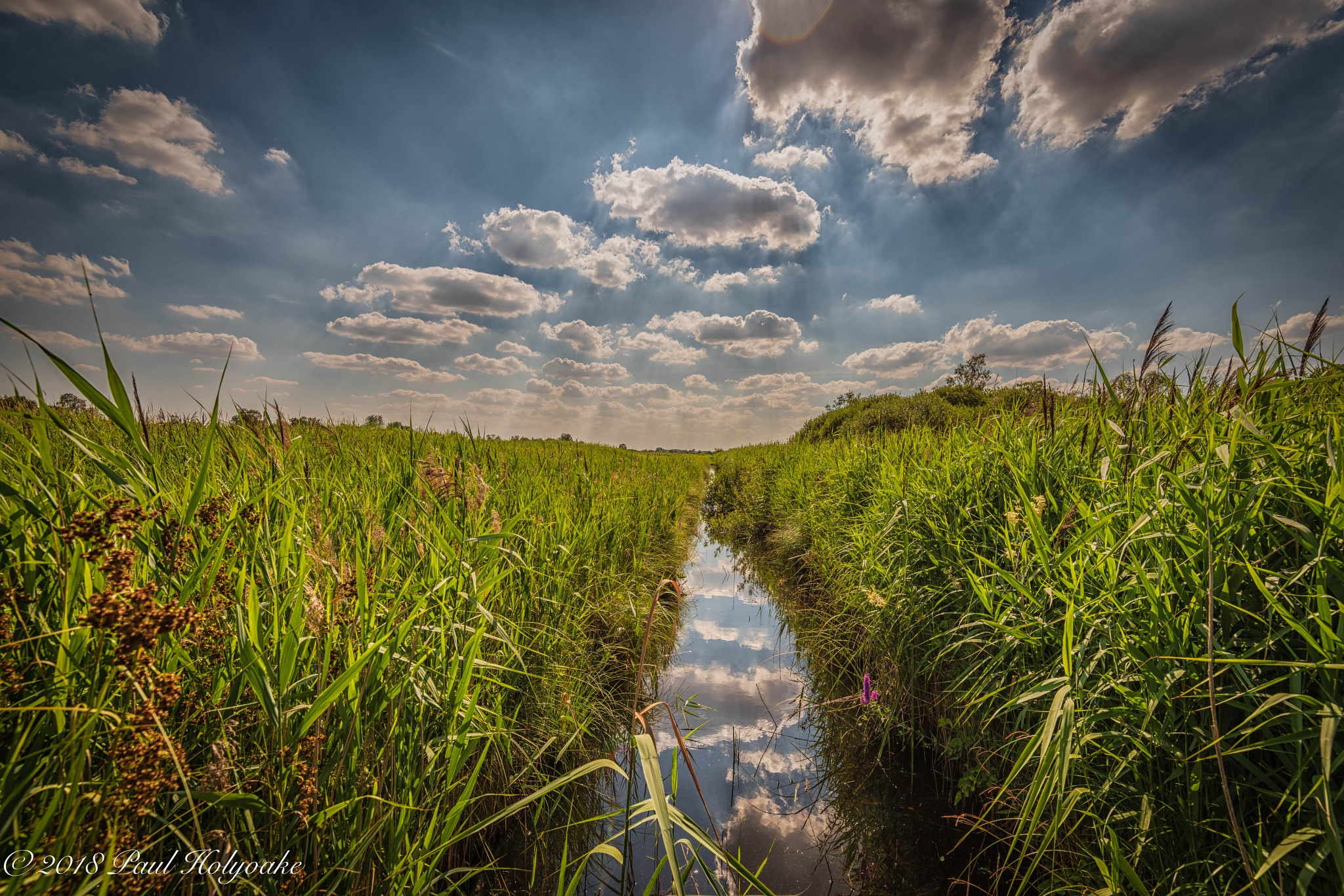 Summer Fen by Photon