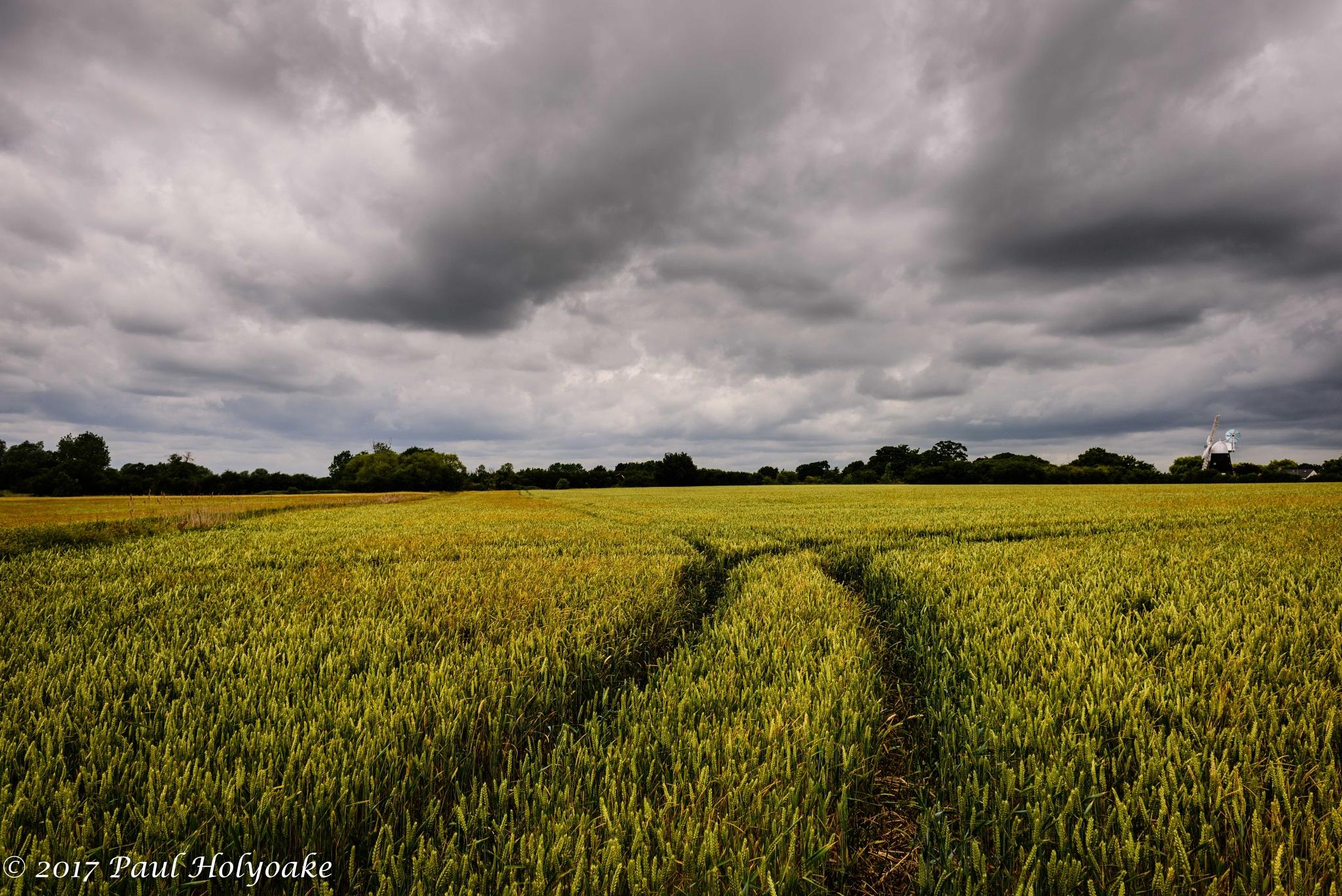 Overcast Wheat by Photon