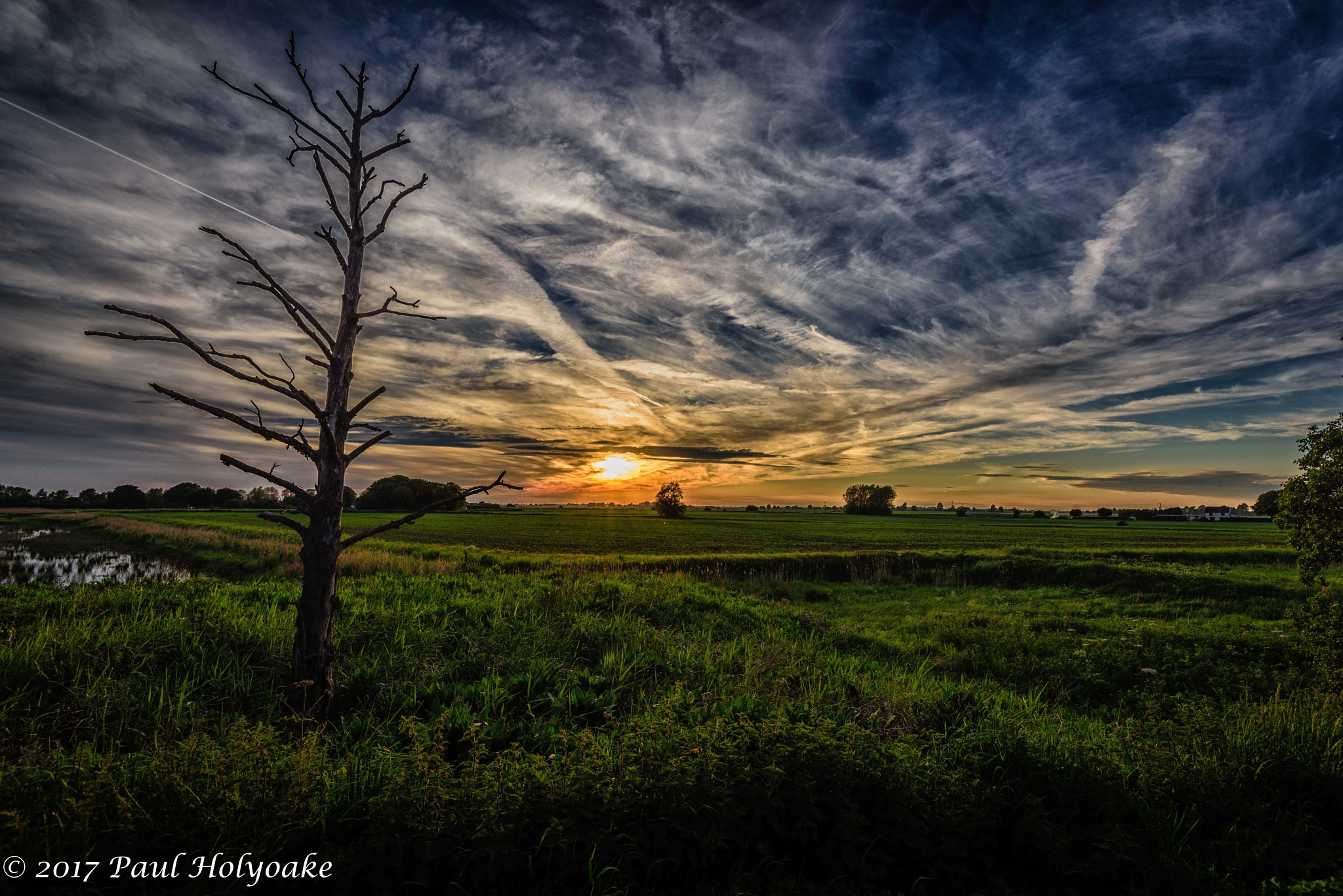 Dead Tree Sunset by Photon