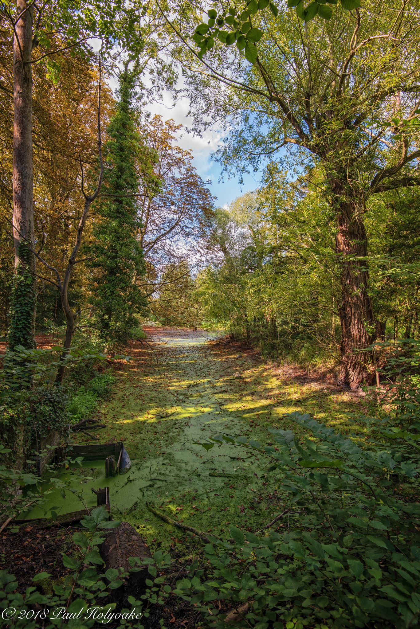 Algae Covered Brook by Photon
