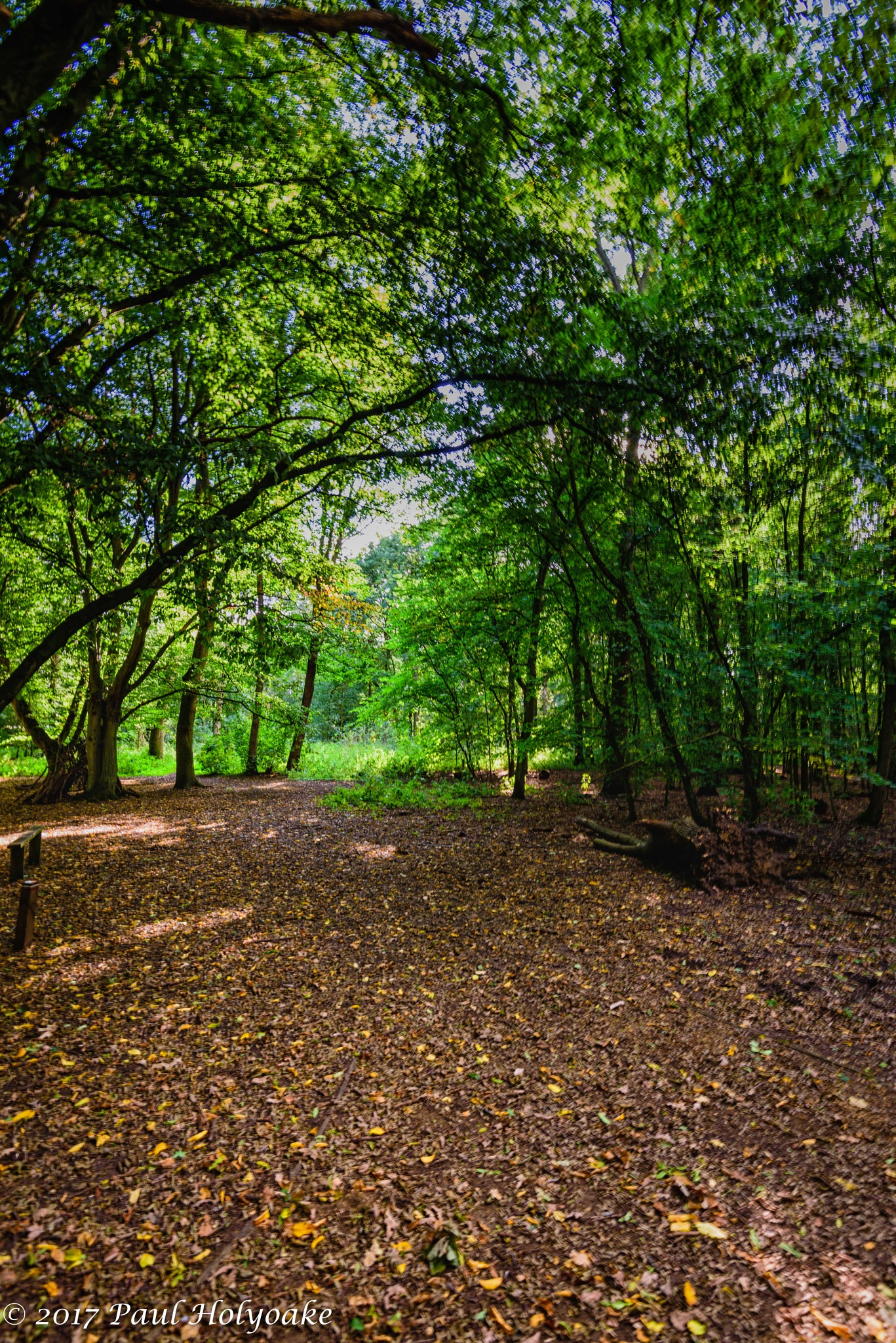Forest Glade by Photon