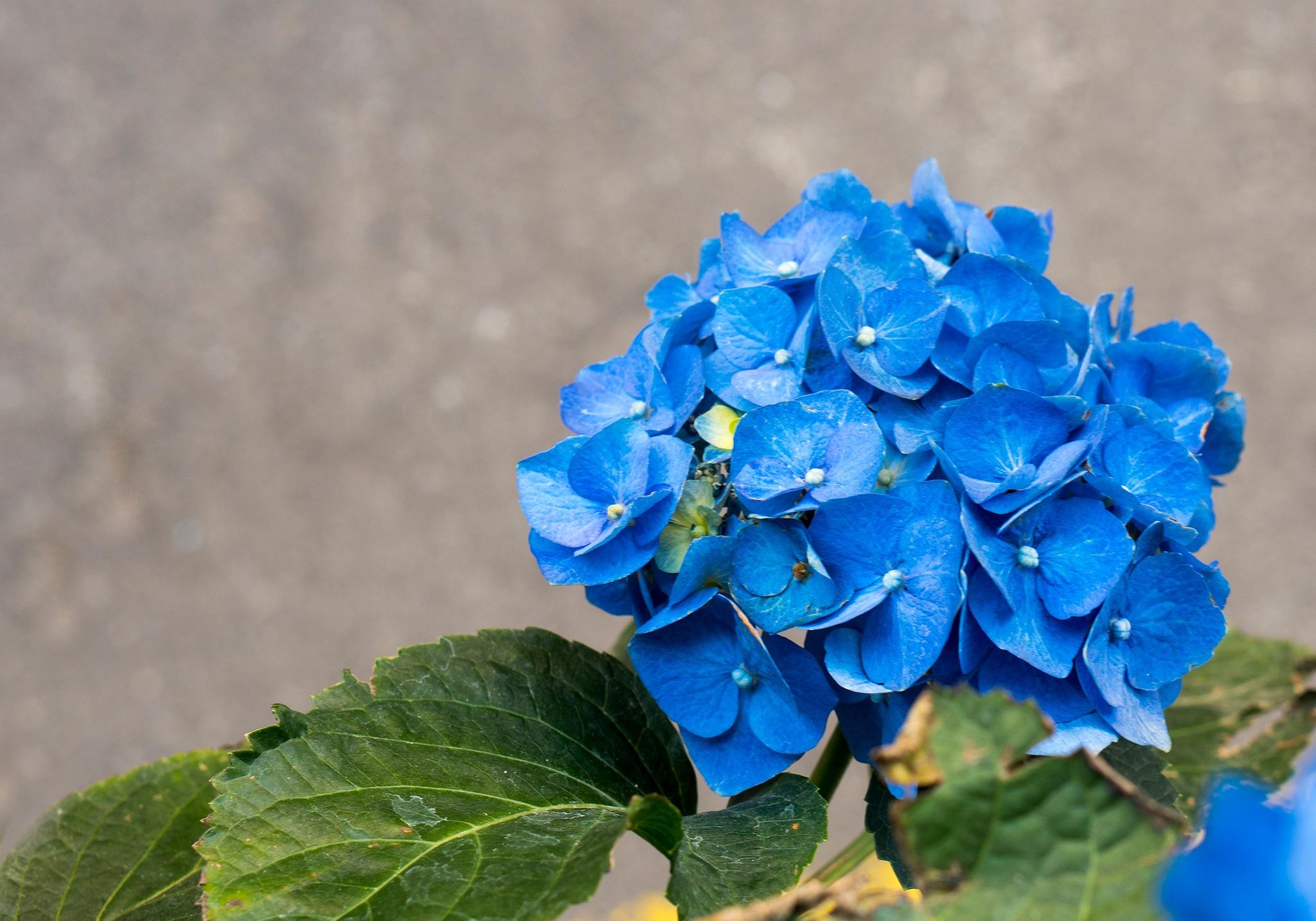 BLUE FLOWER by per f andersen
