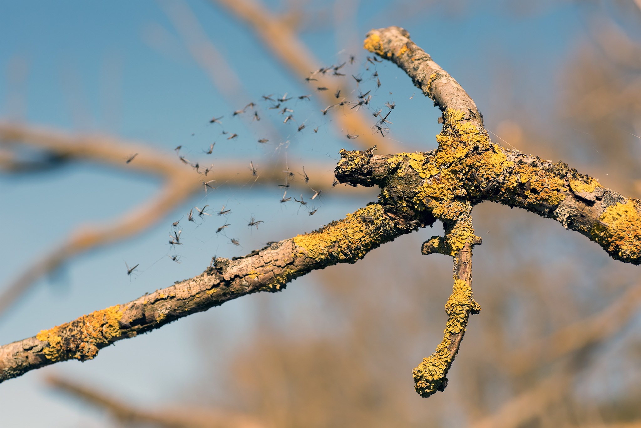 Branch with spider by per f andersen
