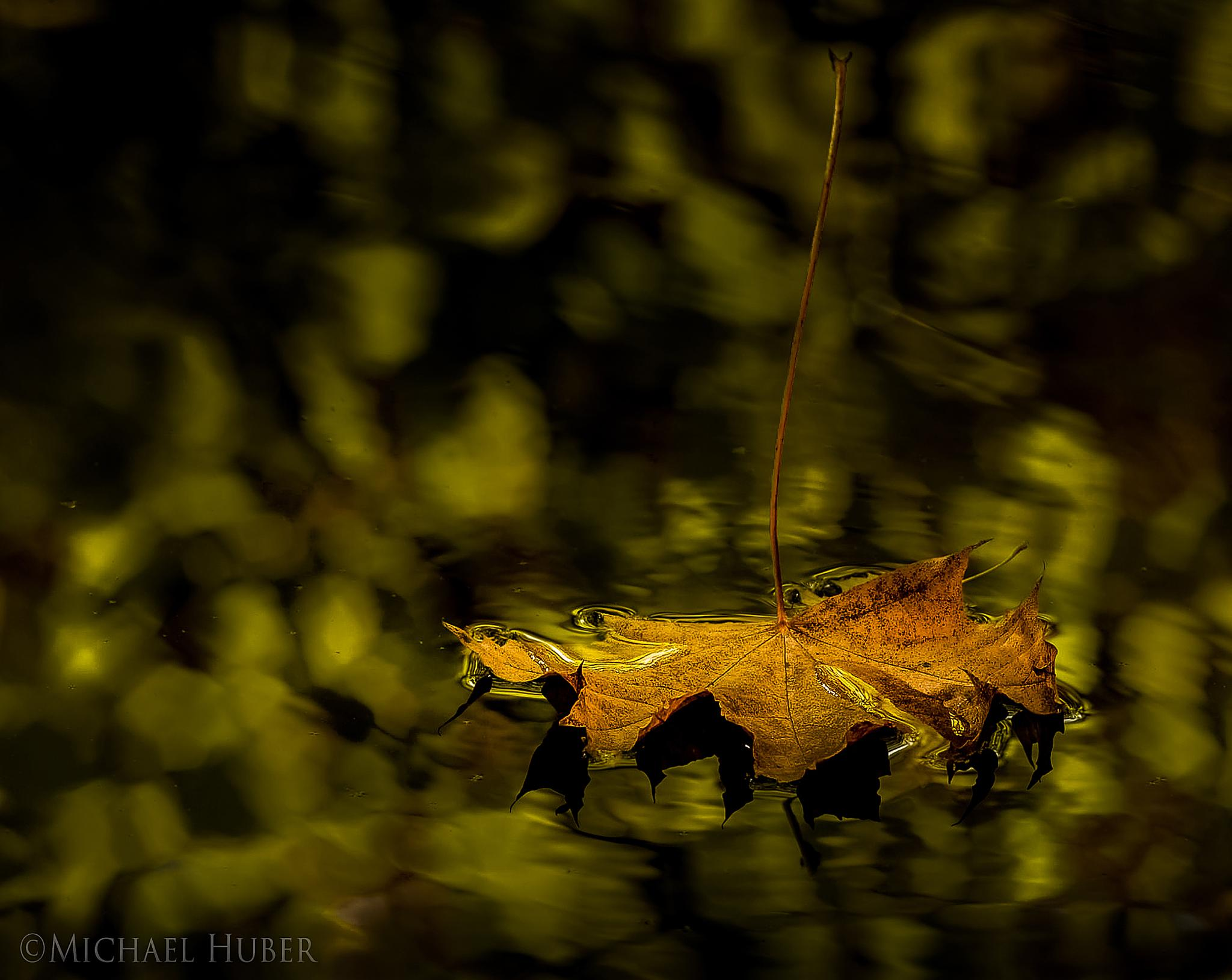 The Travelling Leaf by Michael Huber