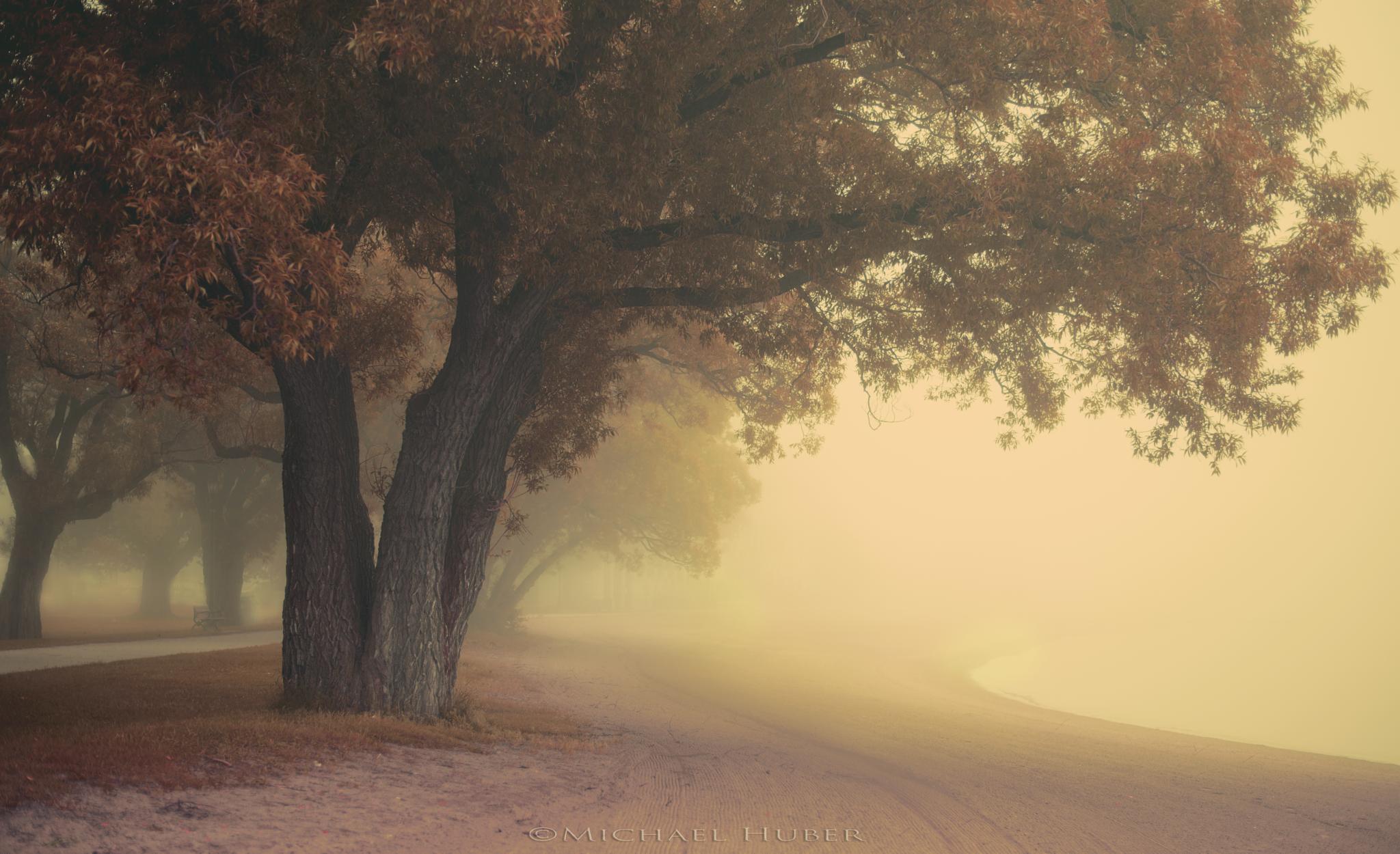Morning Stroll by MichaelHuber