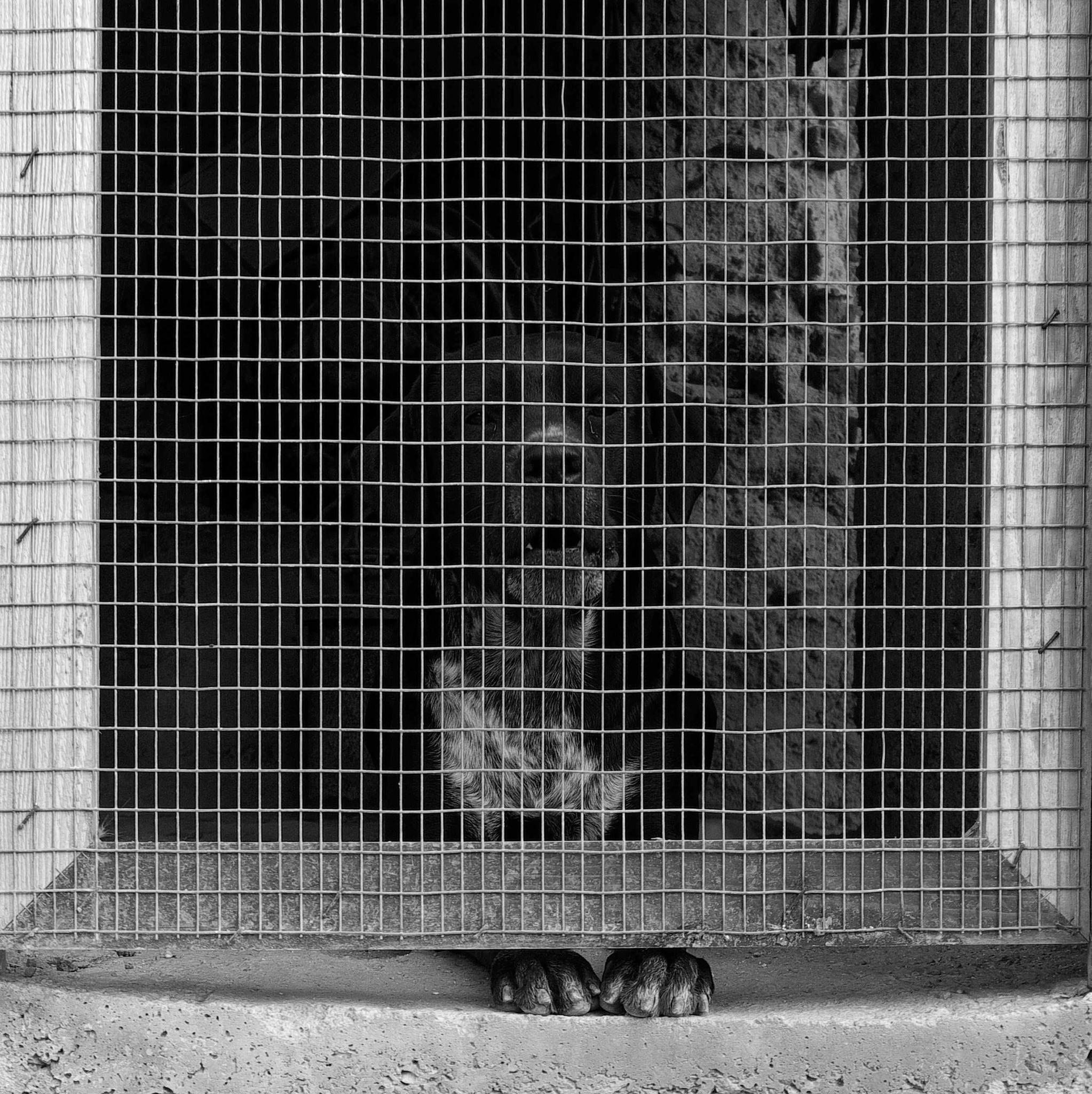 Il carcerato by Ilaria Guccione