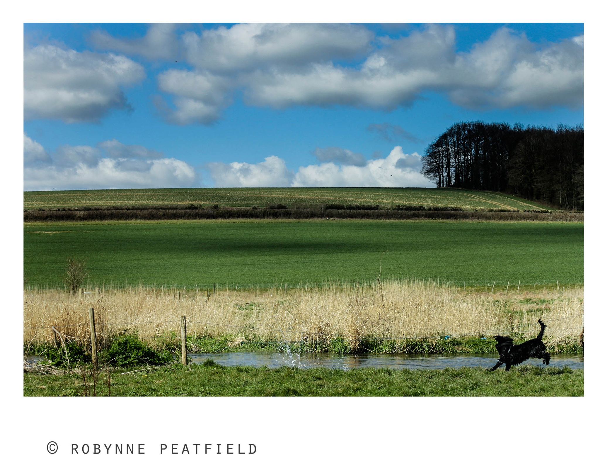 Spring in Hampshire by Robynne Peatfield