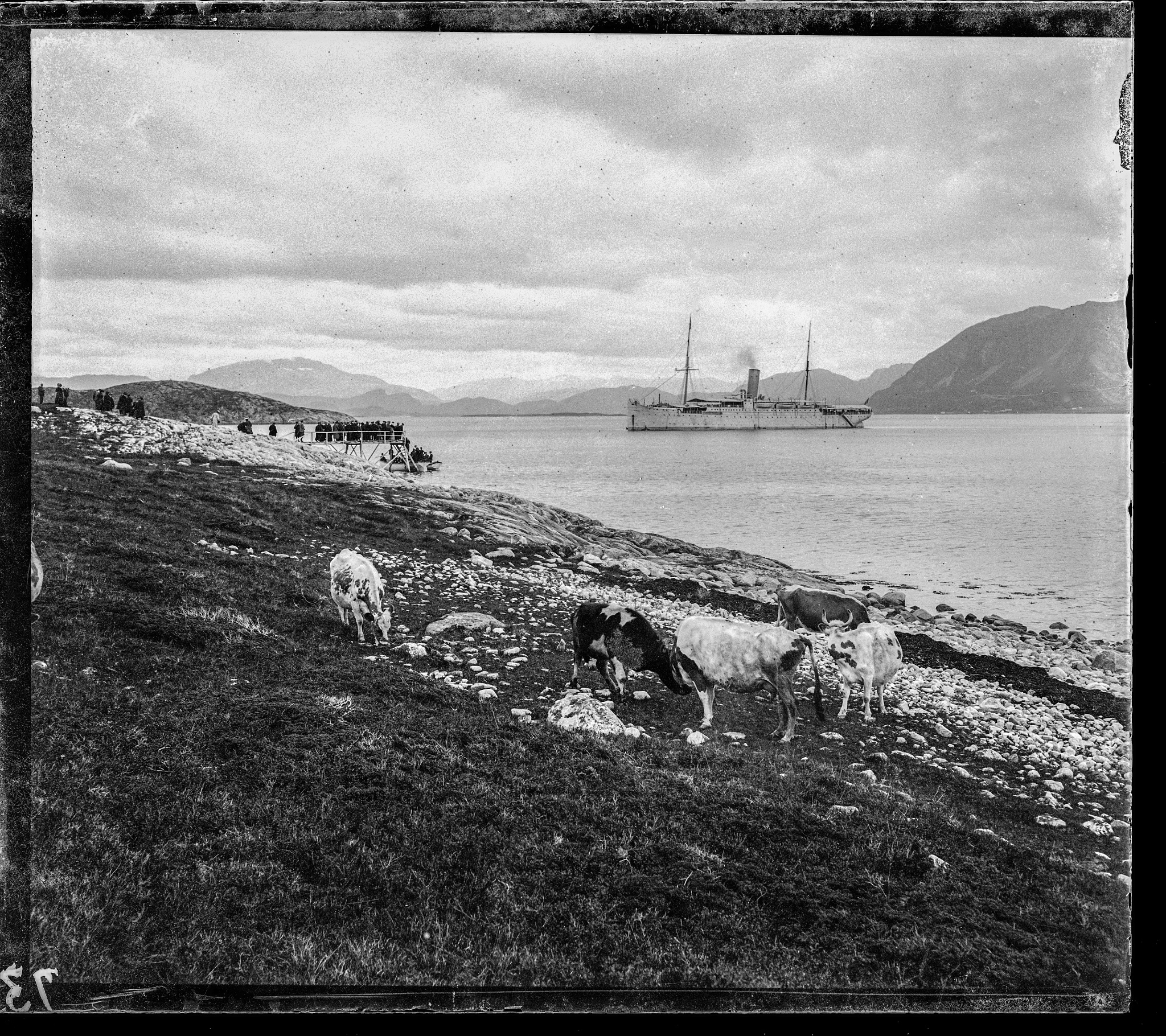 Cruiser, tourists and cows in a fjord, Norway, ca. 1897 by Martine de Lajudie