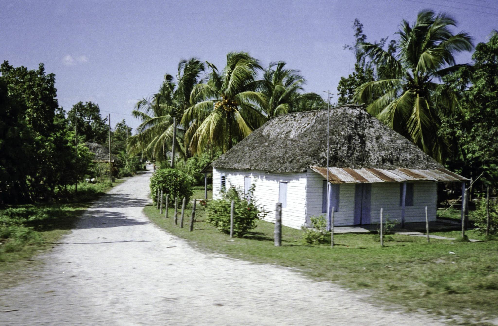Cuba : house and coconuts, 1991 by Martine de Lajudie