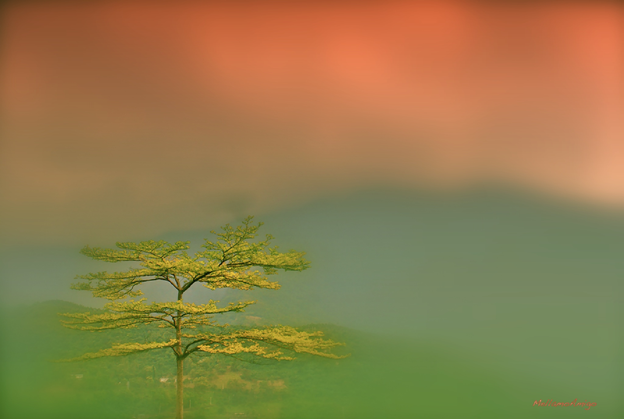 nature in mood  by Mellamo Atef Amigo Aziz