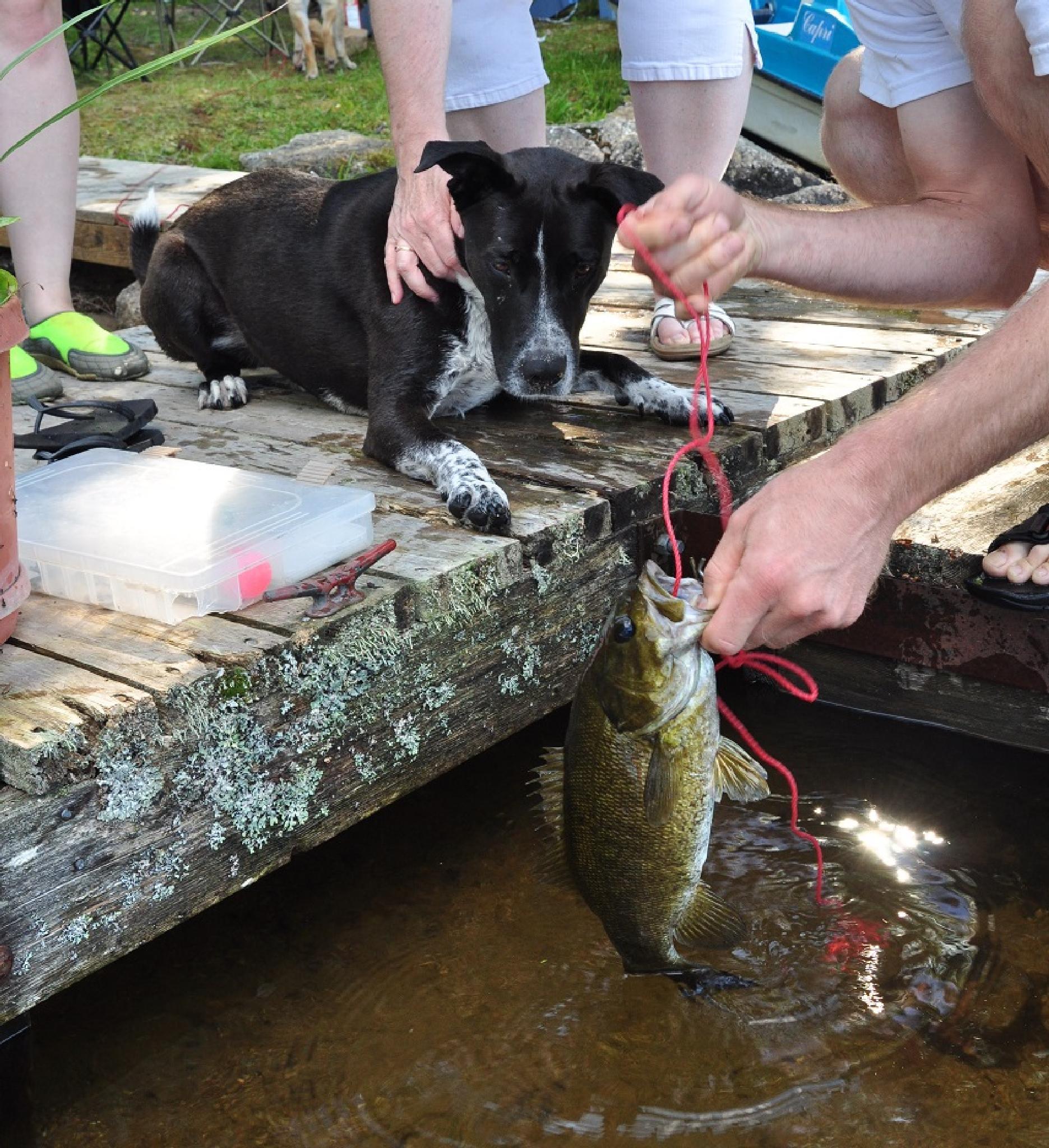 Dog & Fish by cole26_woy