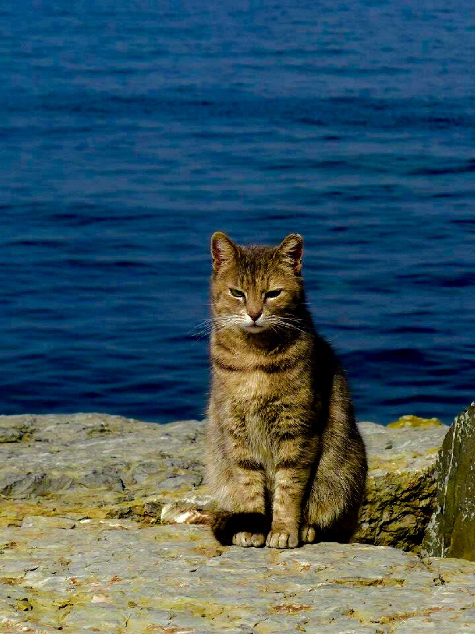 Cat by nsg55