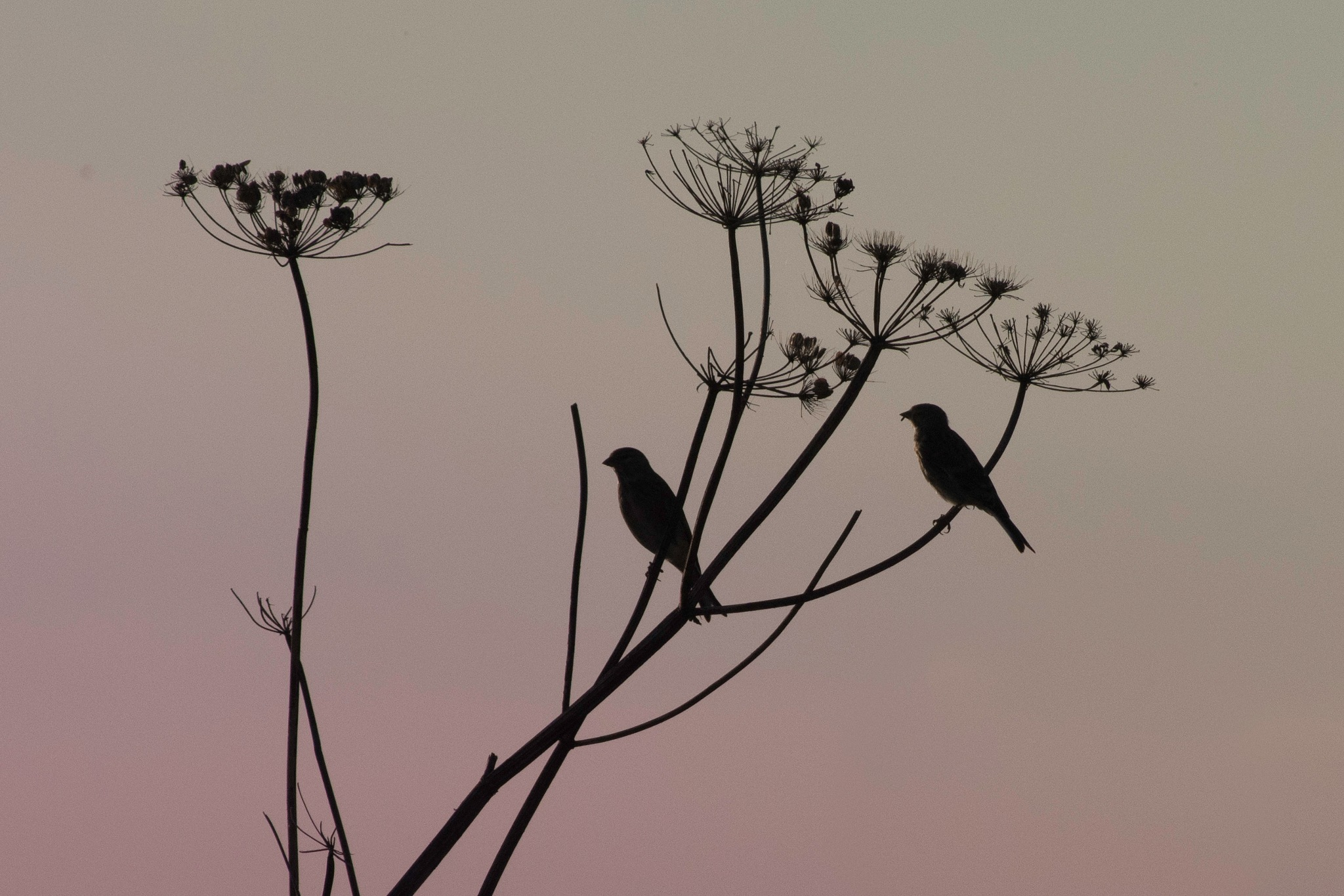 Photo in Nature #birds #sunset #bush #wildlife #nature #plant