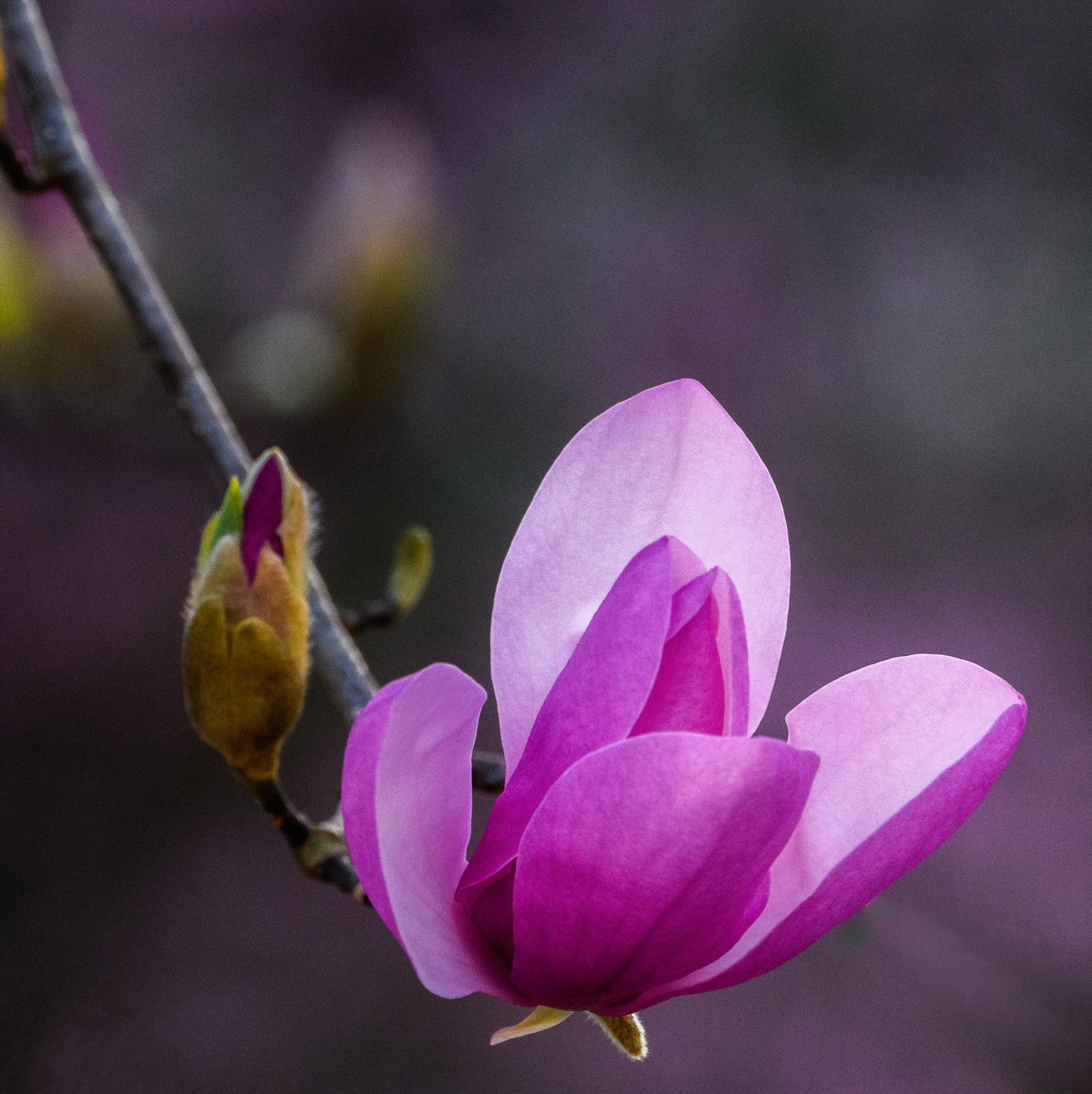 Spring Awakening by Steve Director