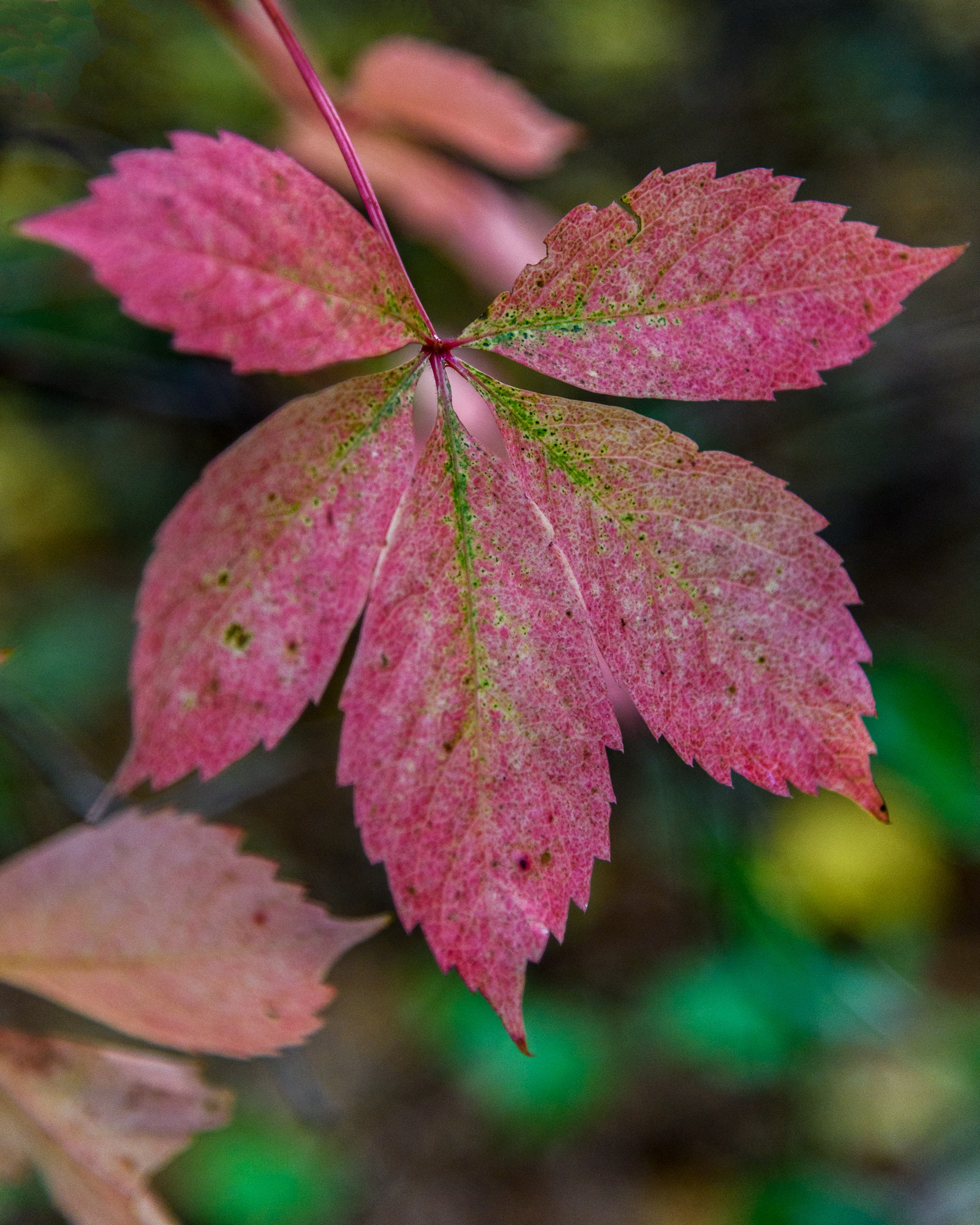 Colors of Fall #1 by Steve Director