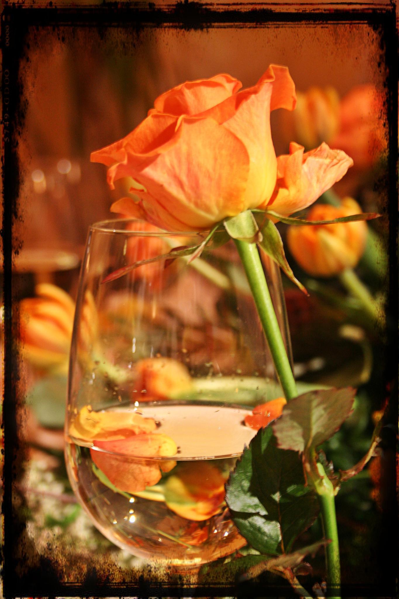 Rose by Cris Estalayo