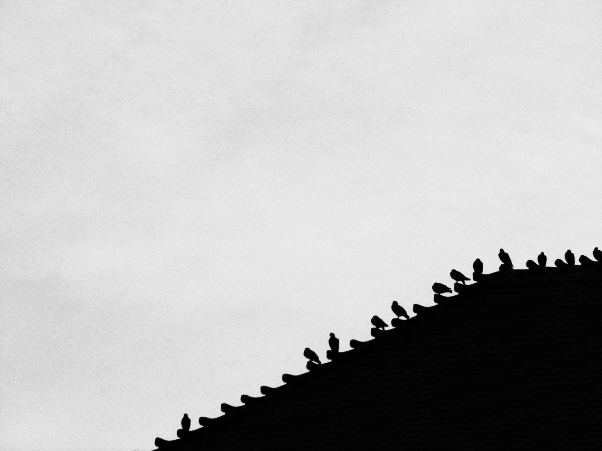 Birds by MostafaMousa