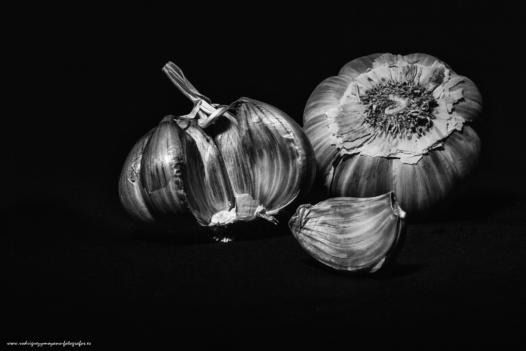 allium sativum by luisrguez