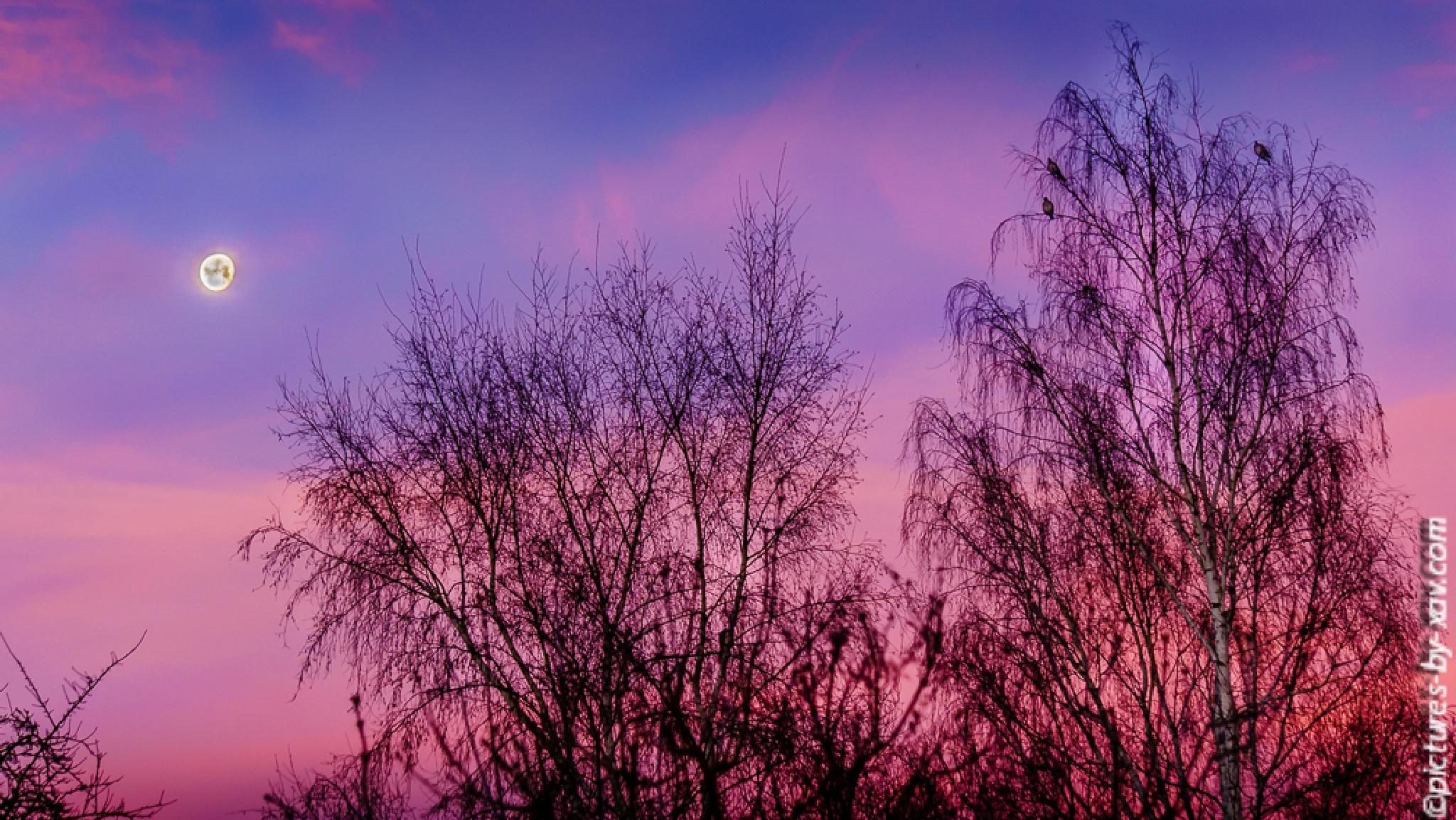 Photo in Landscape #ciel #matin #couleur #dégradé #rose #bleu #nuage
