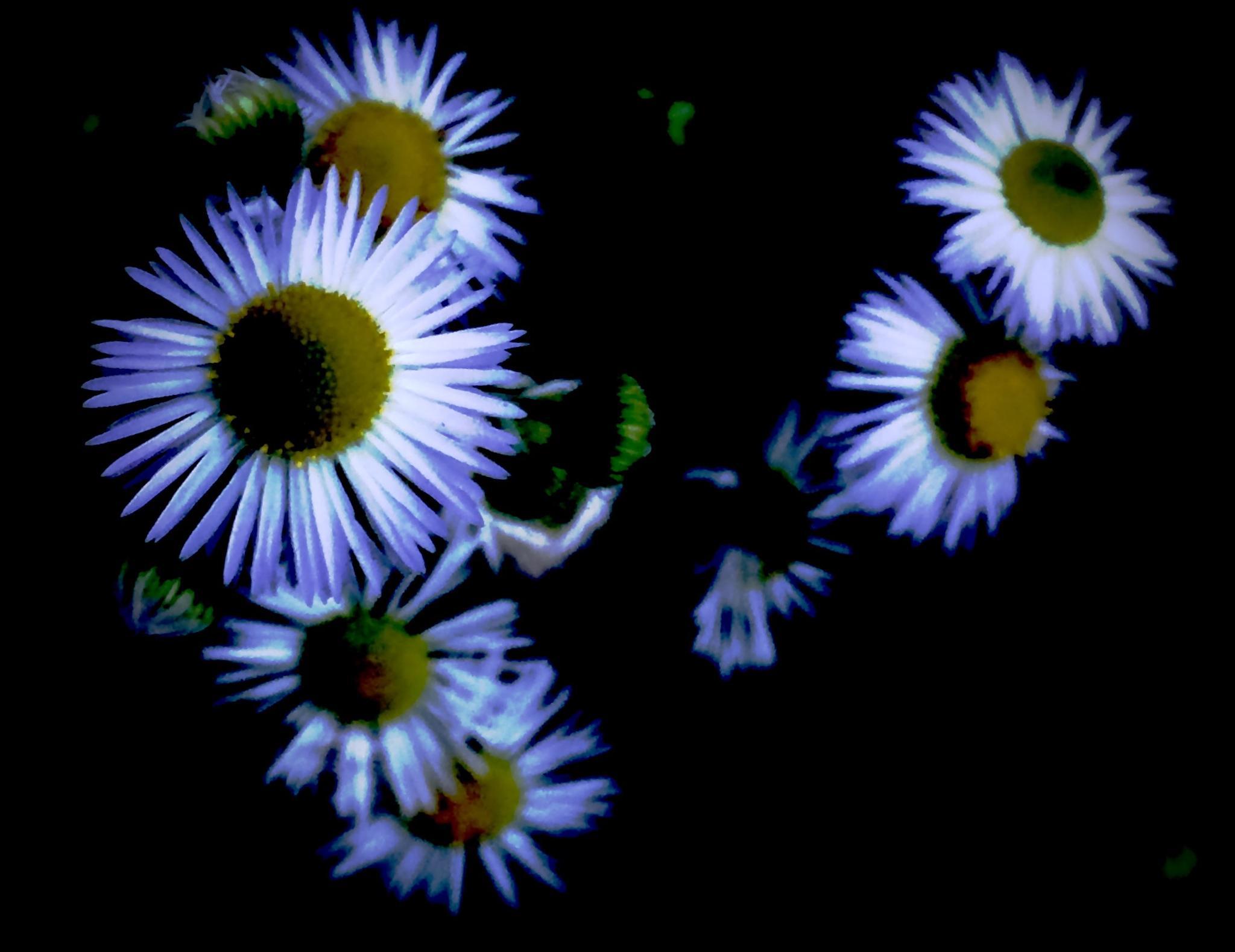 Weeds in Bloom by 103aspen10