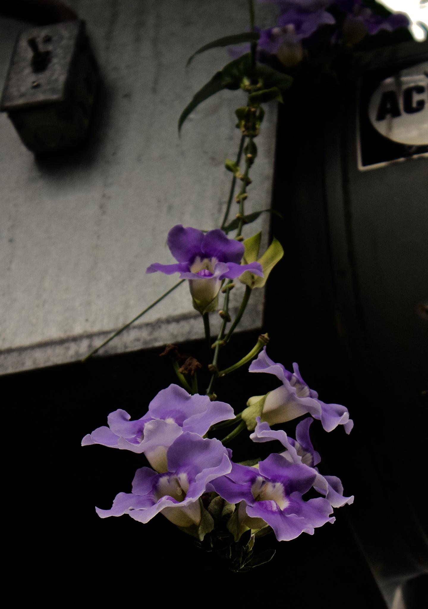 A/C Flowers by 103aspen10