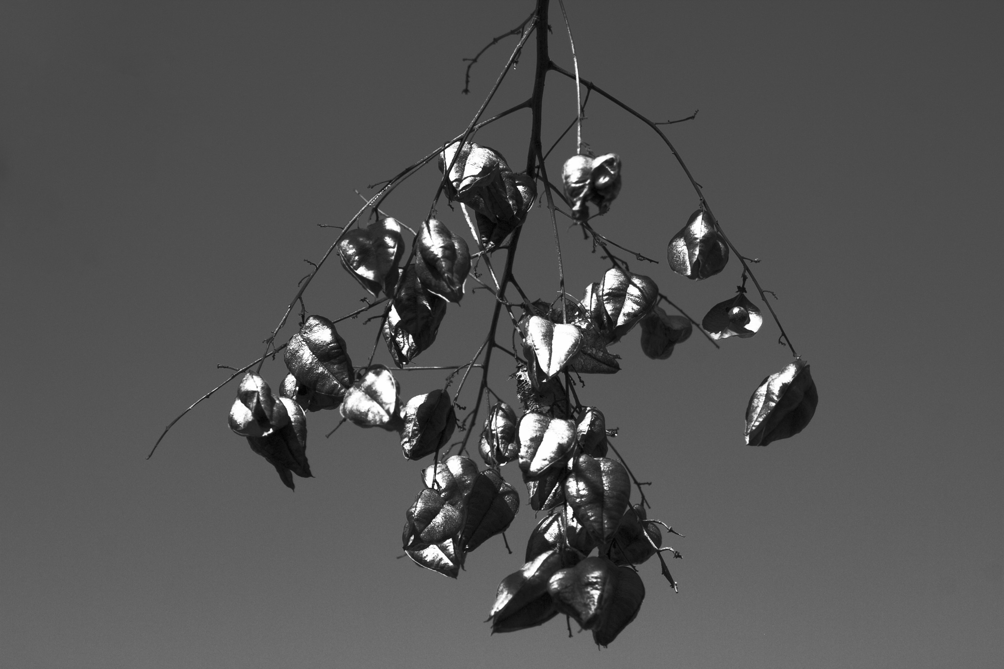 Tree Seed Pods by 103aspen10