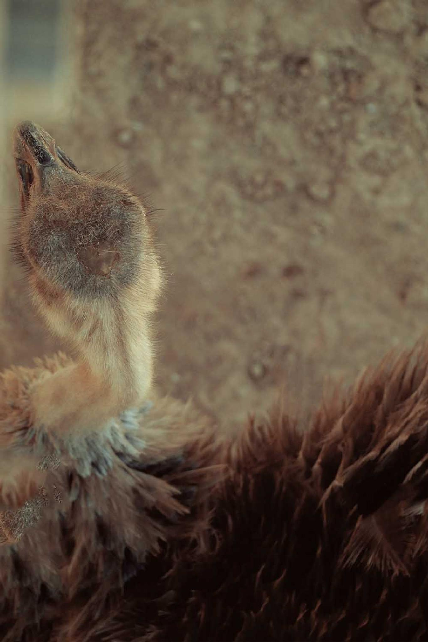 Ostrich by Serge
