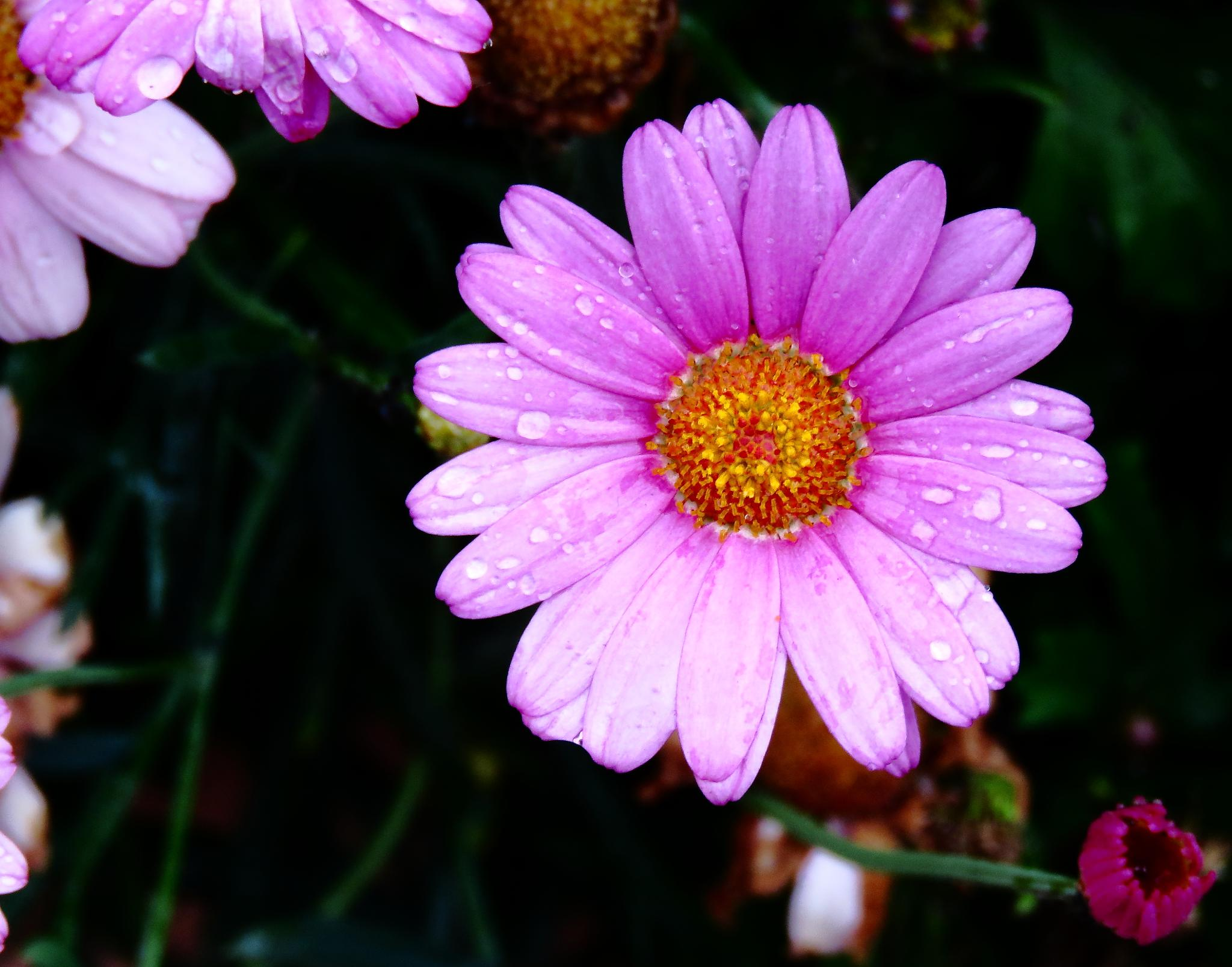 Flower by Henrik Printz