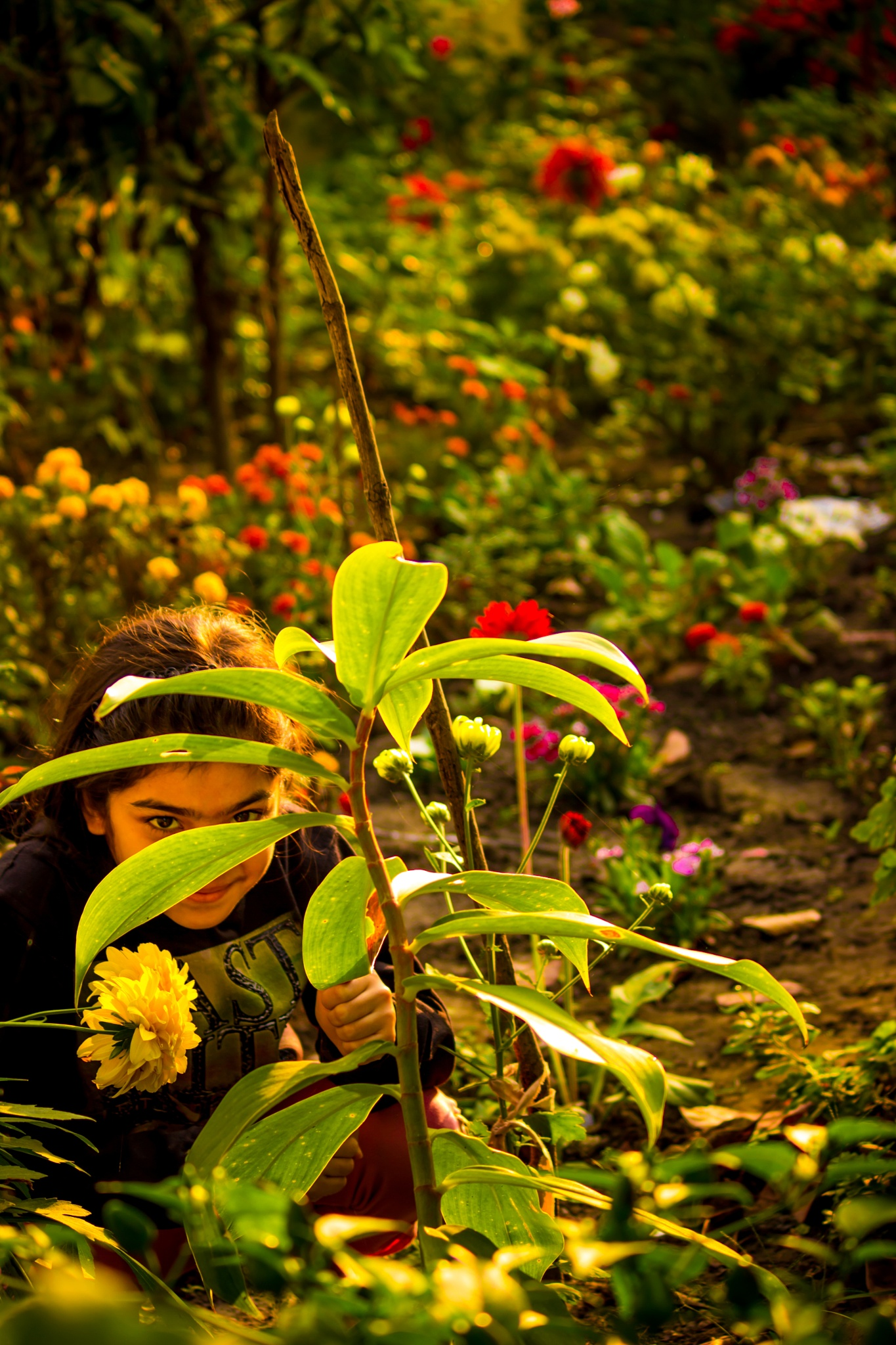 Flower Is A Soul Blossoming In Nature by Nikhil Mace