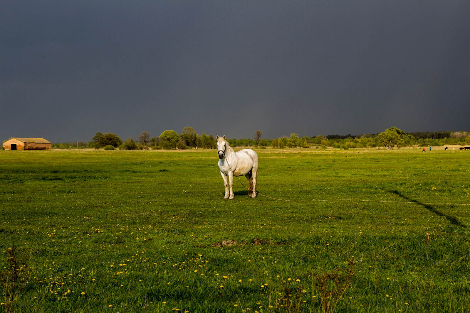 horse on nature by Andriy Medyna