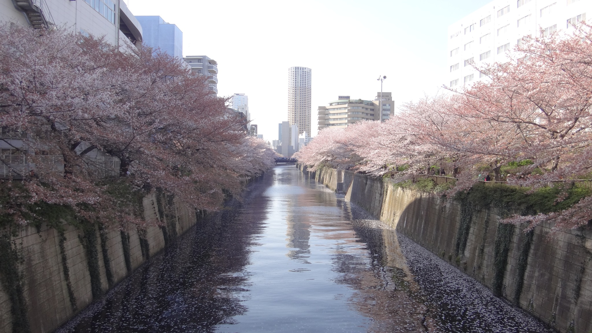 Tokyo Spring by guicq