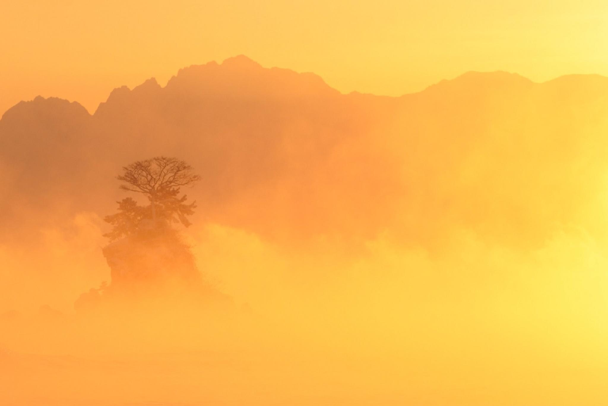 Beautiful Orange by Ken Ohki