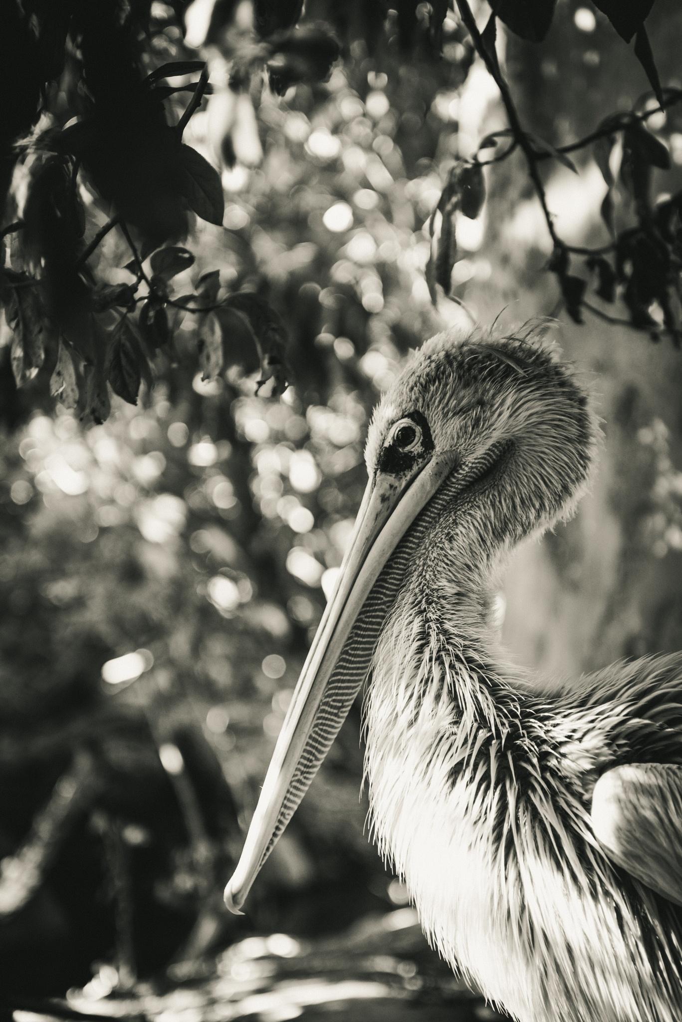 Bird in profile by Marie N