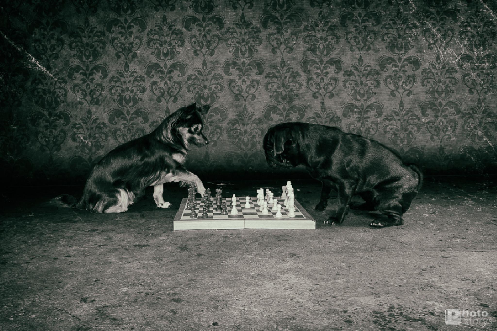 #031 - Dog Chess by Oliver Pinkoss