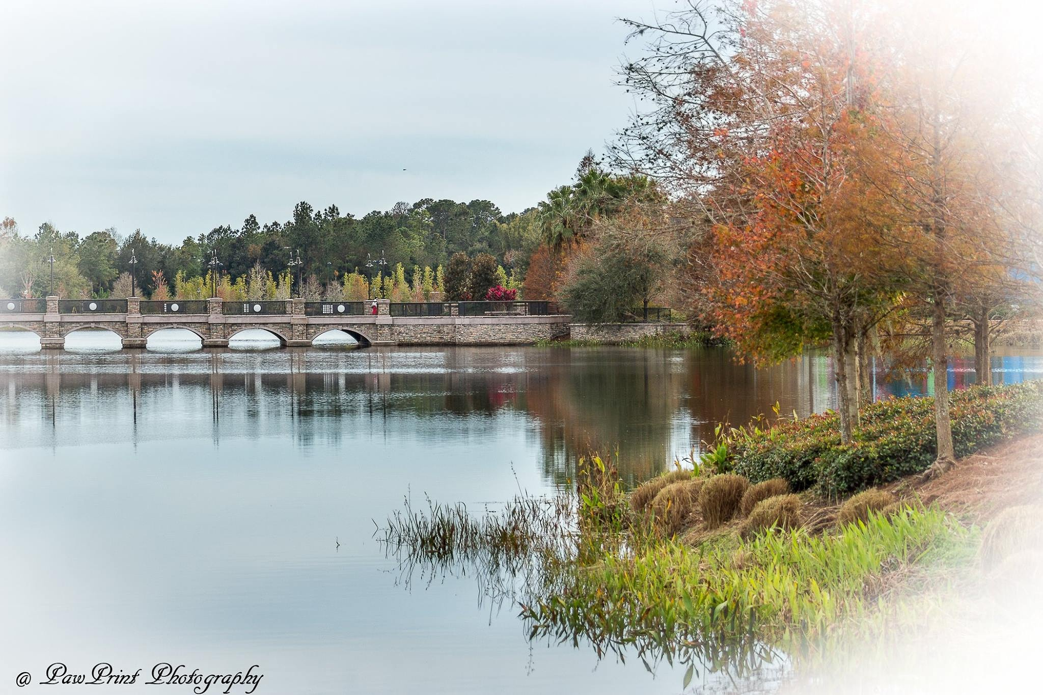 over the bridge by Lynn  Flood/PawPrint Photography/Flash Flood Photo and Design