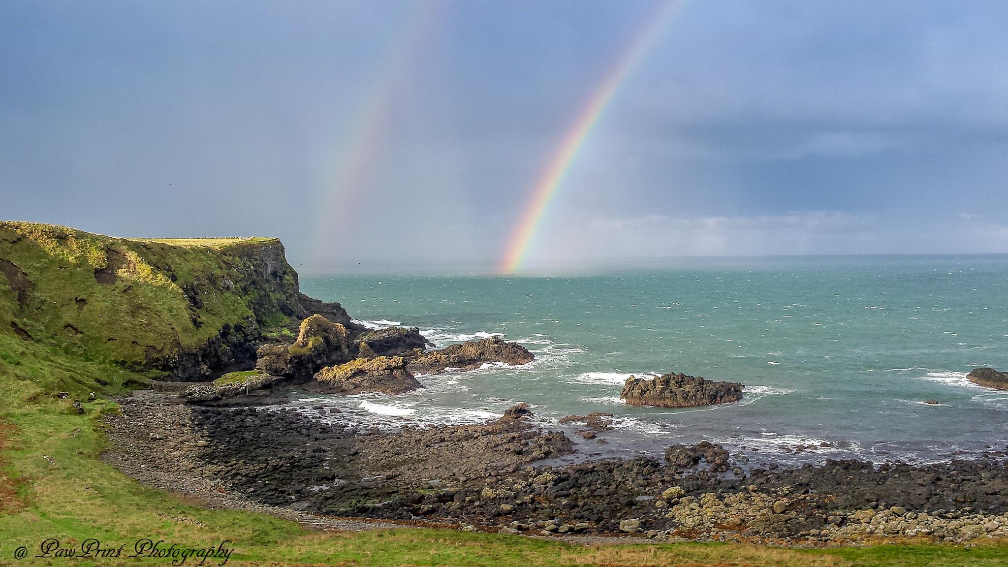 Ireland by Lynn  Flood/PawPrint Photography/Flash Flood Photo and Design