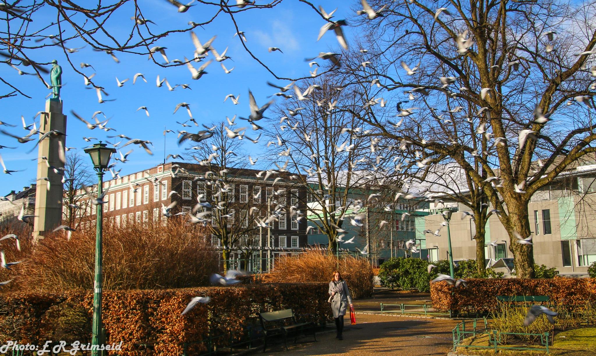 City Park , Bergen  by Espen Rune Grimseid