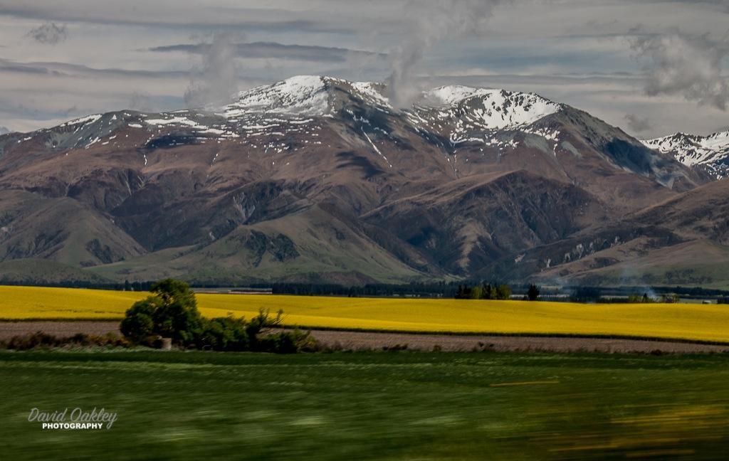 Yellow Fields by David Oakley