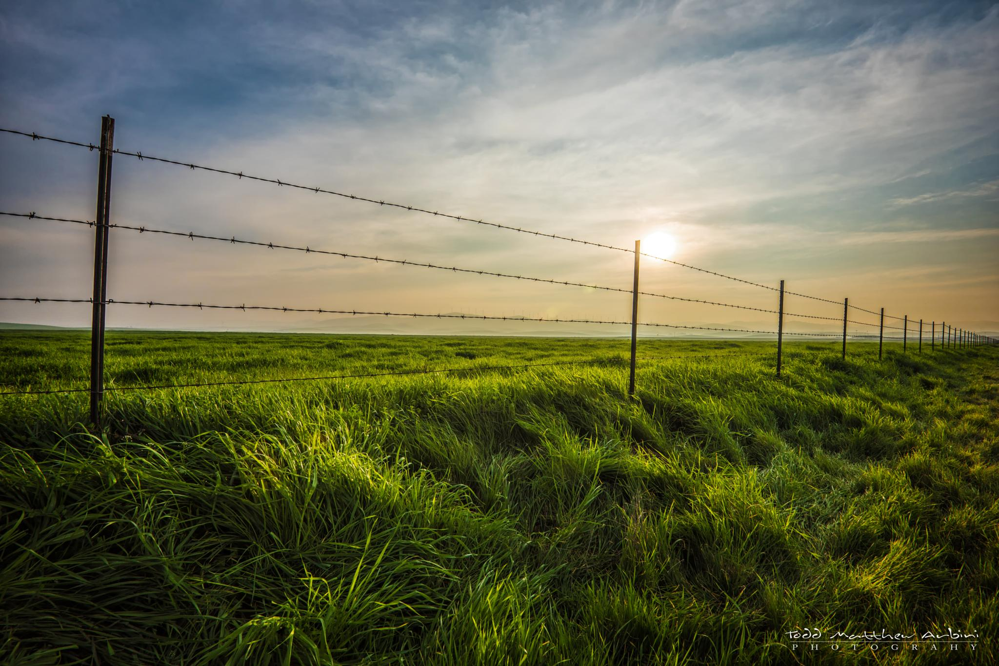 Fenced by Todd Arbini
