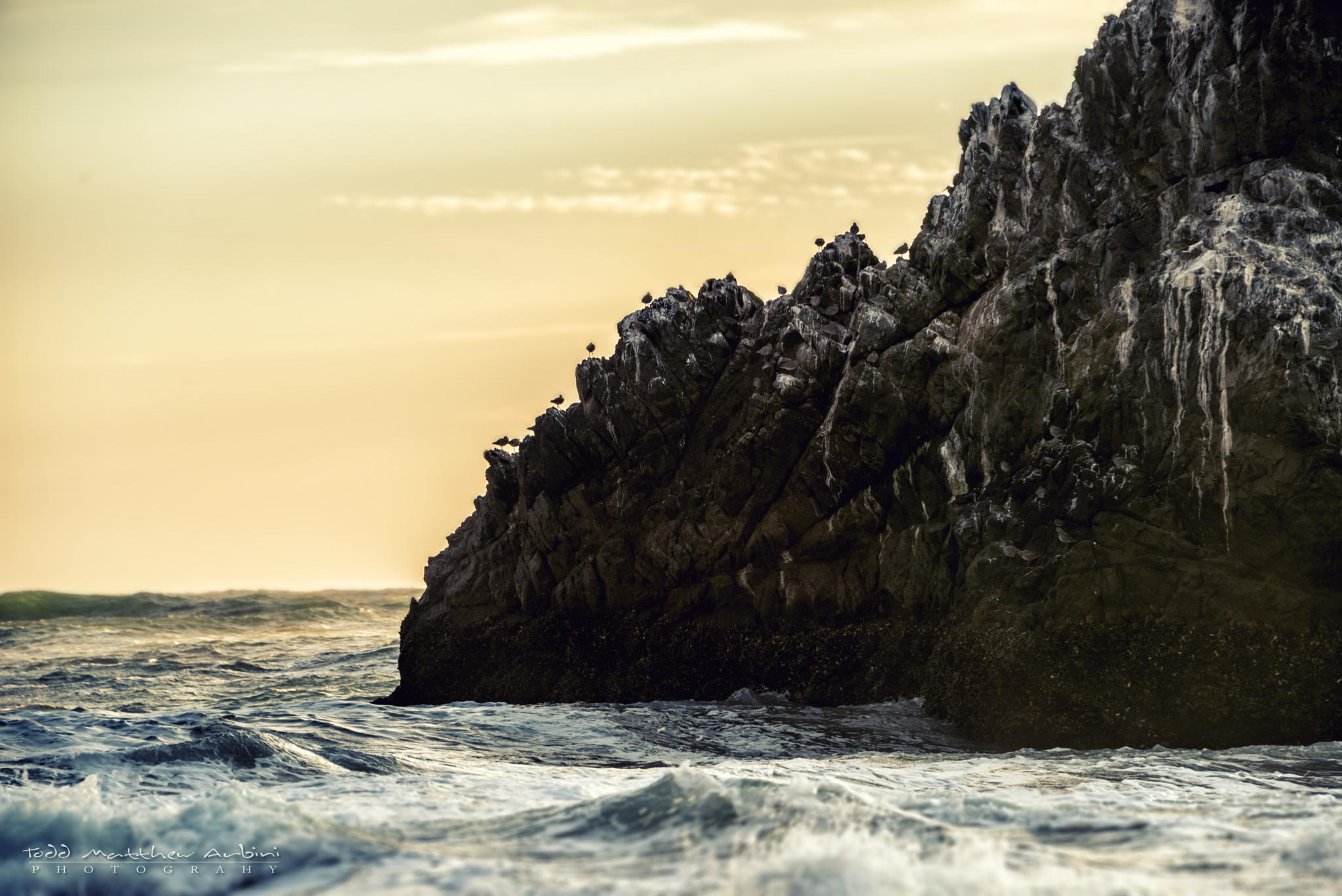 Seal Rock by Todd Arbini