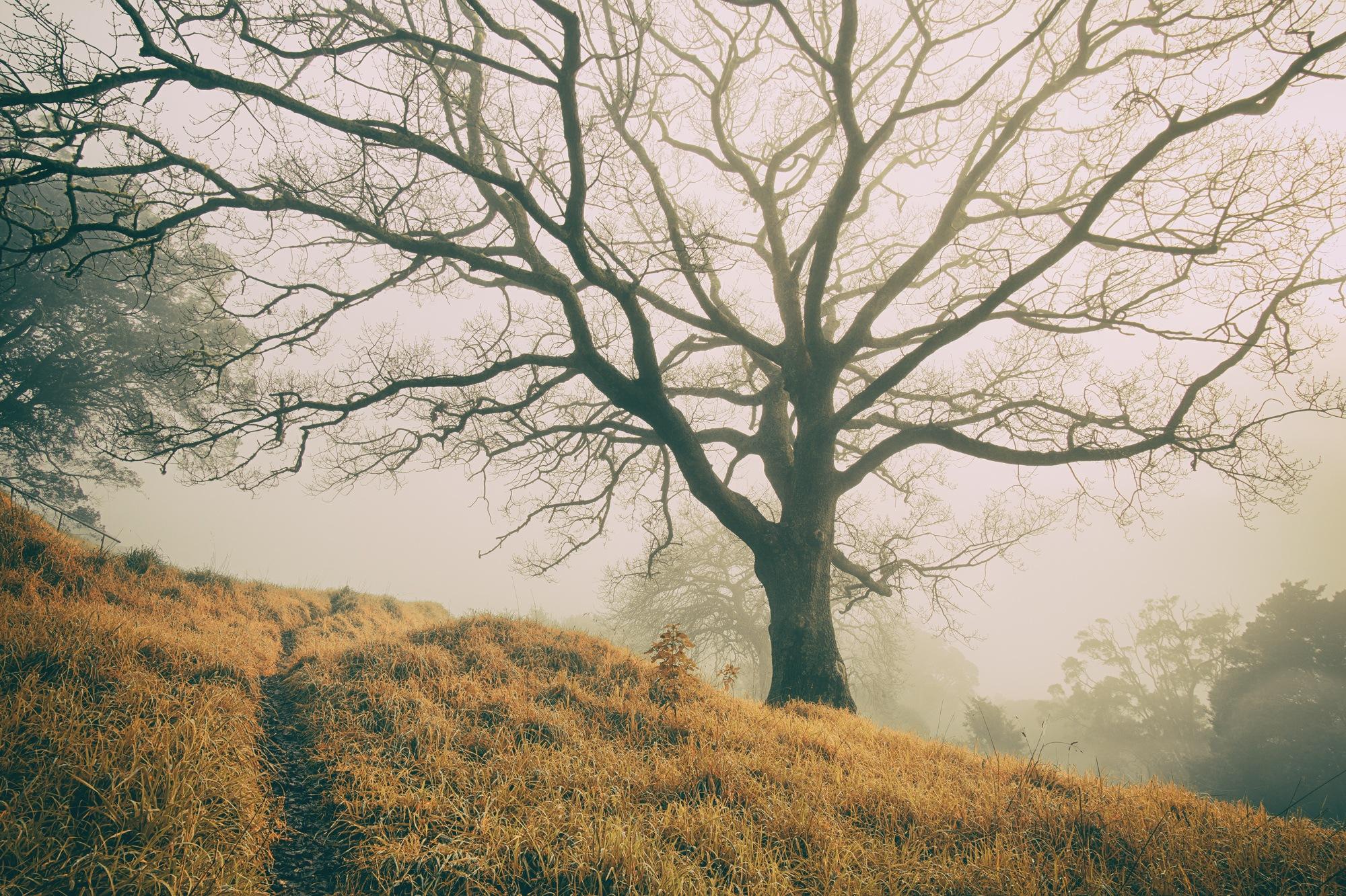 Mist by Graham Averell