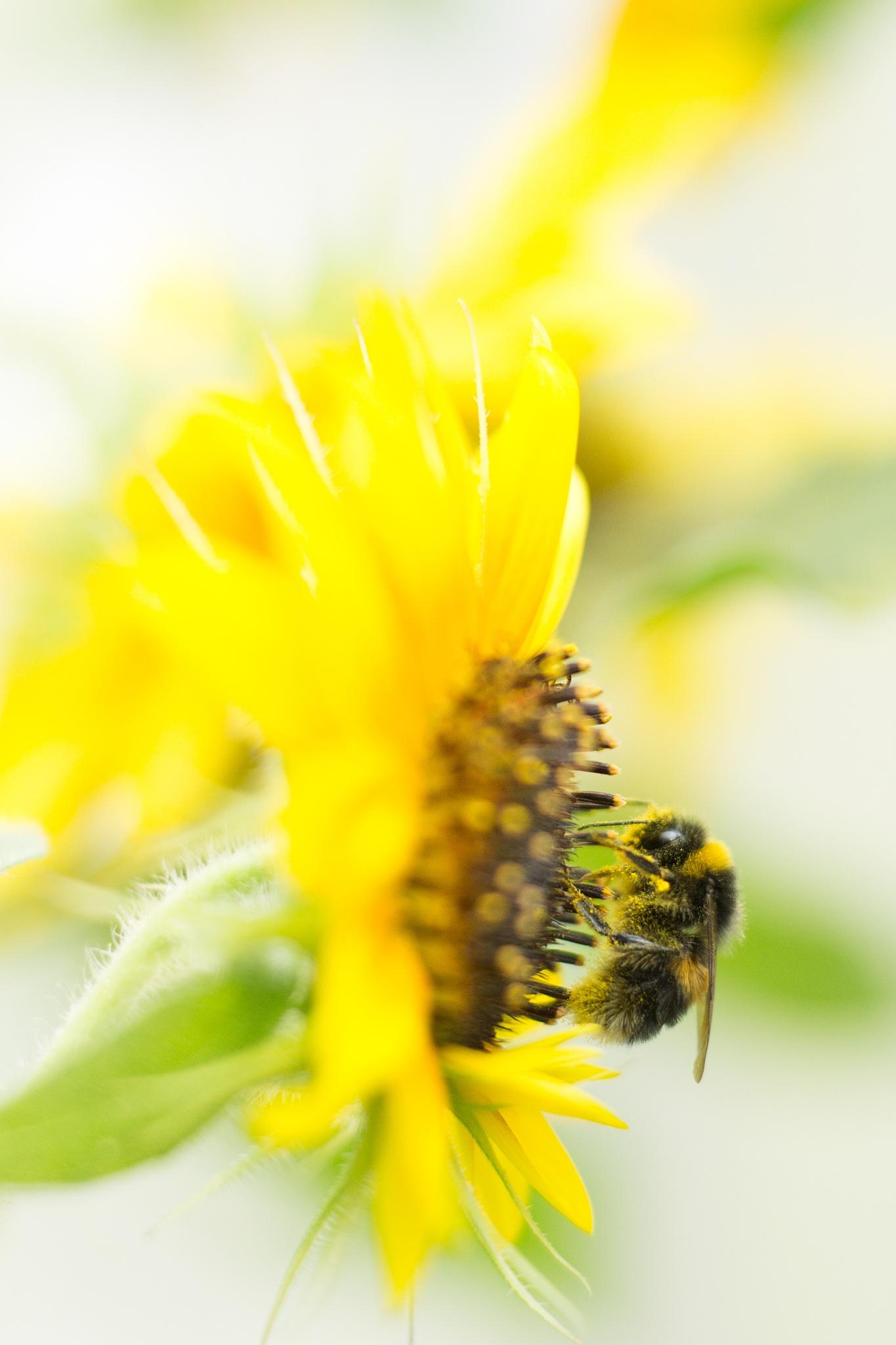 Pollen Gathering by Graham Averell