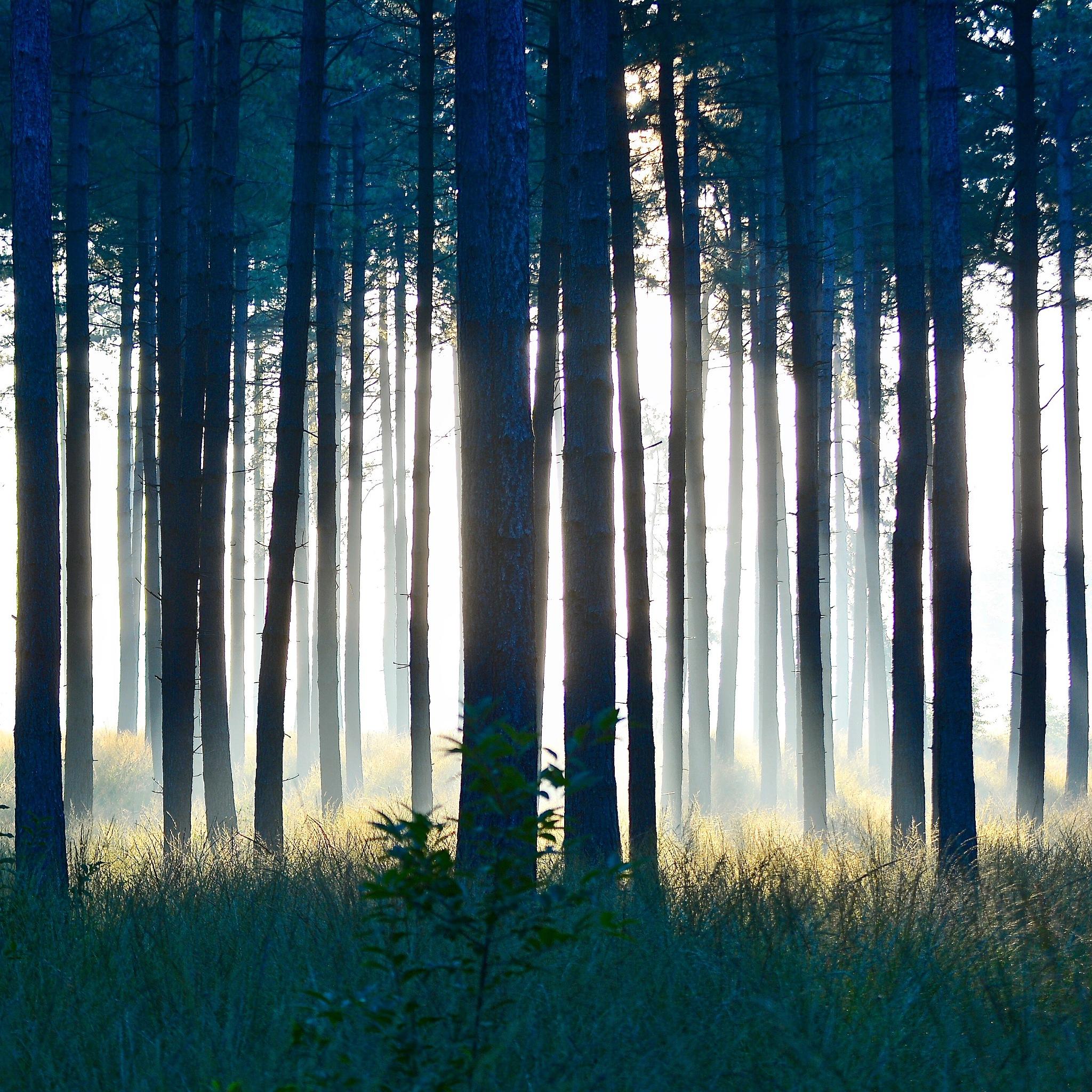 Foggy forest by toinelenssen