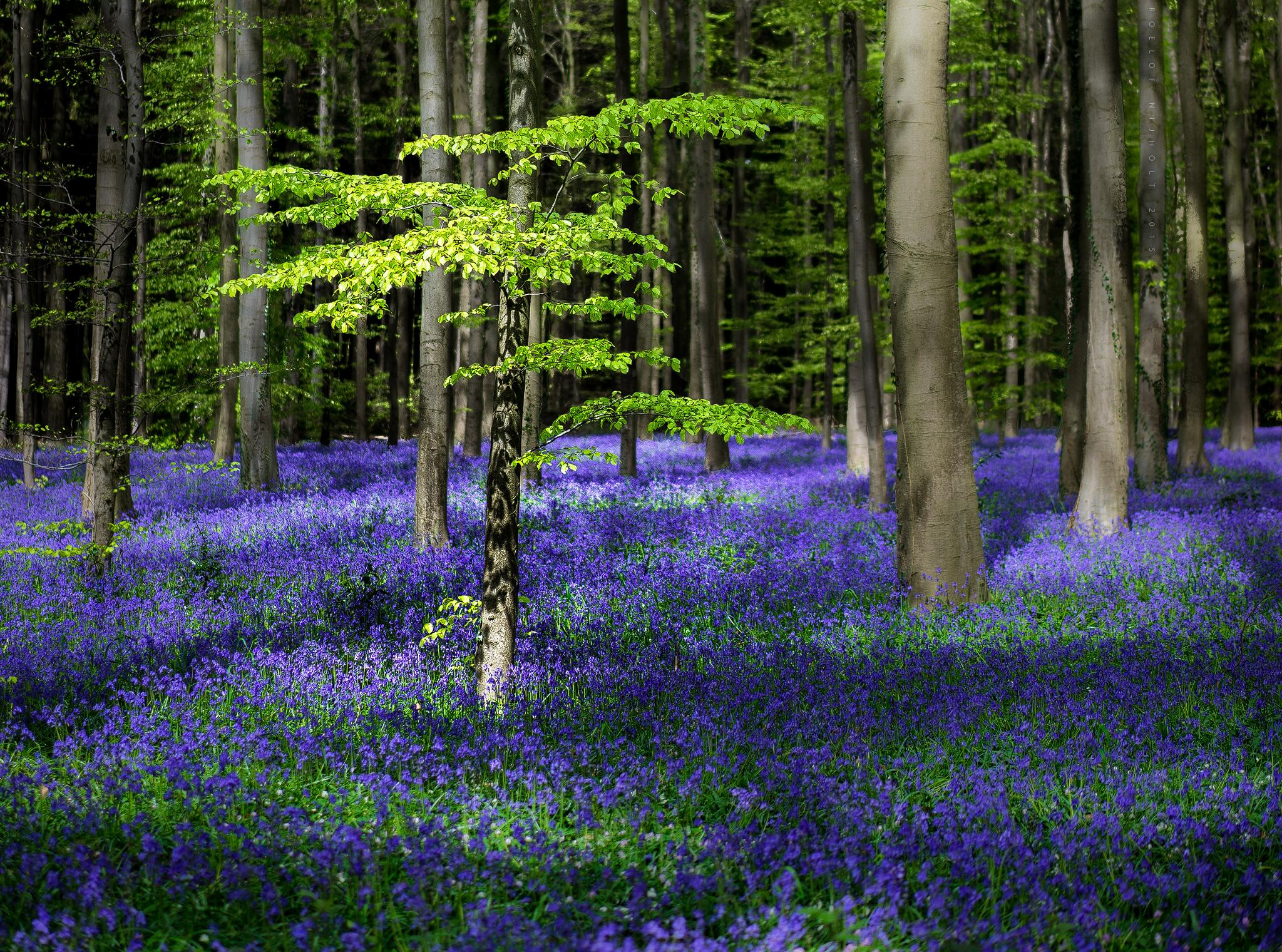 Enchanted forest by Roelof