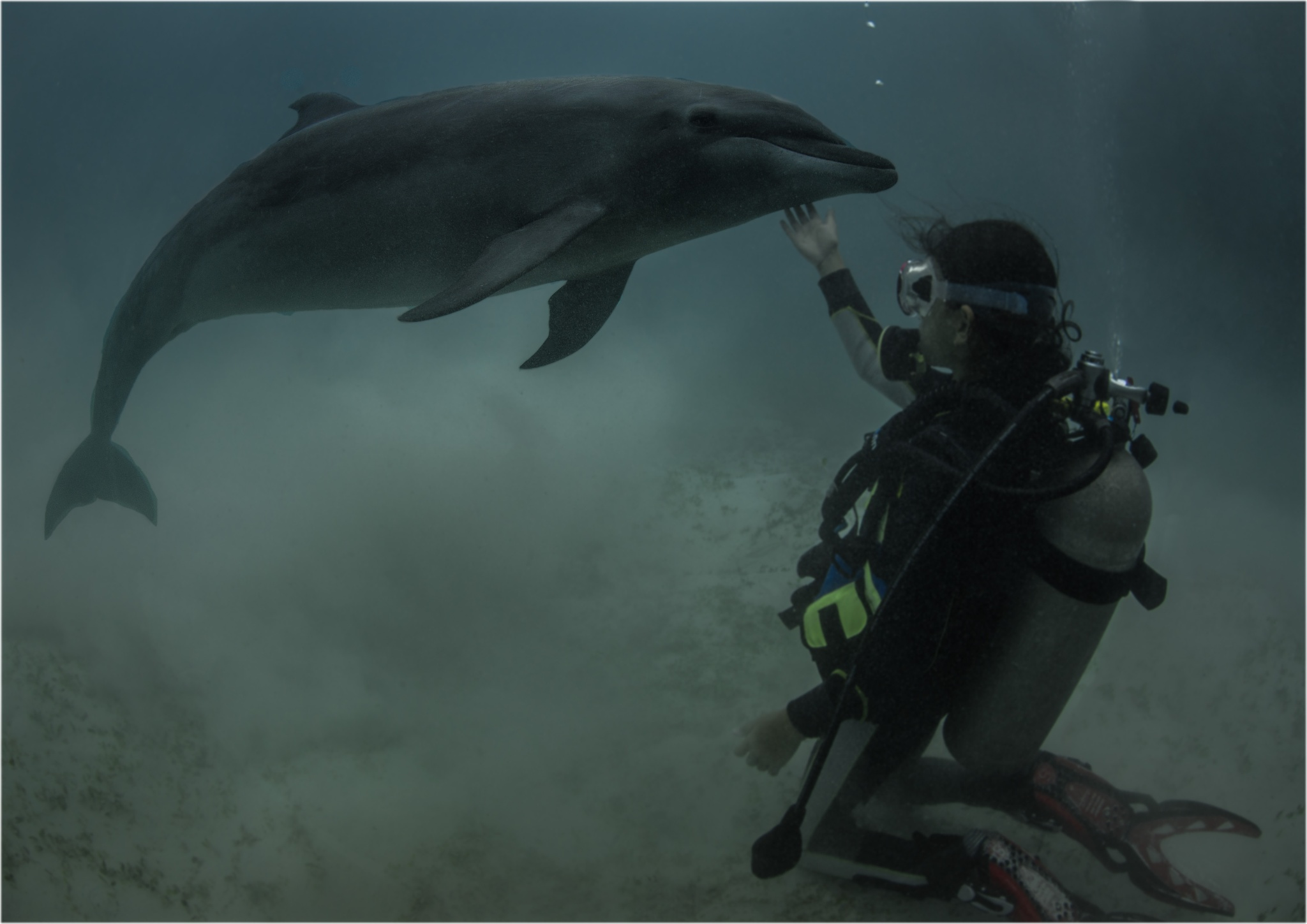 Girl and Dolphin by Dr. Ortwin Khan